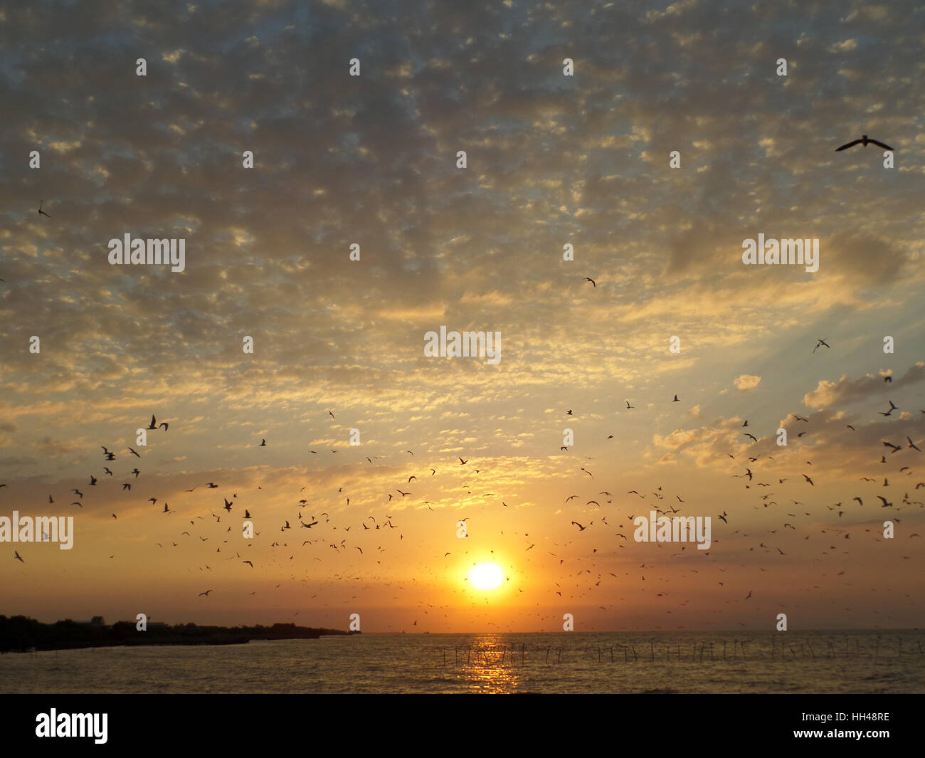 Stunning view of many flying Seagulls against the rising sun over the placid sea, Gulf of Thailand - Stock Image