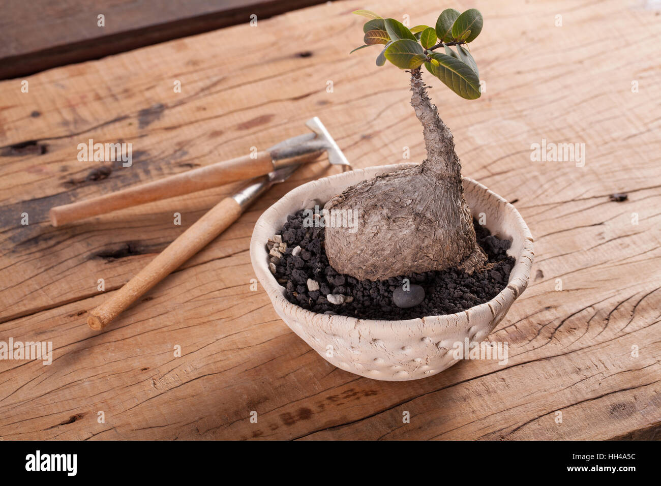 Mini Cactus Garden Put With Stone Arranged In Wide Pot Or Round Ceramic  Tray With Garden Tools