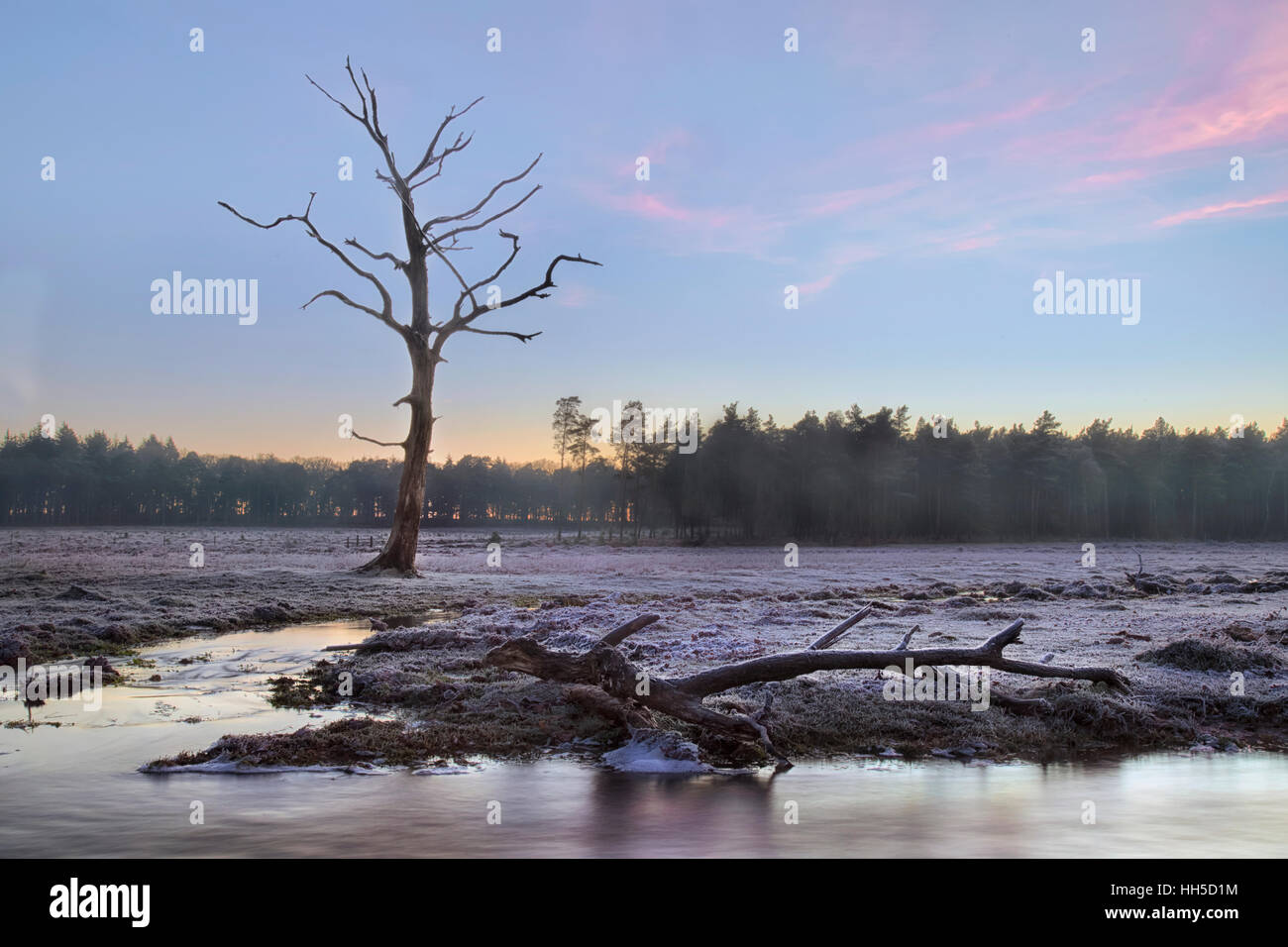 a frosty morning at Mill Lawn Brook, Lyndhurst, New Forest, Hampshire, England, UK - Stock Image
