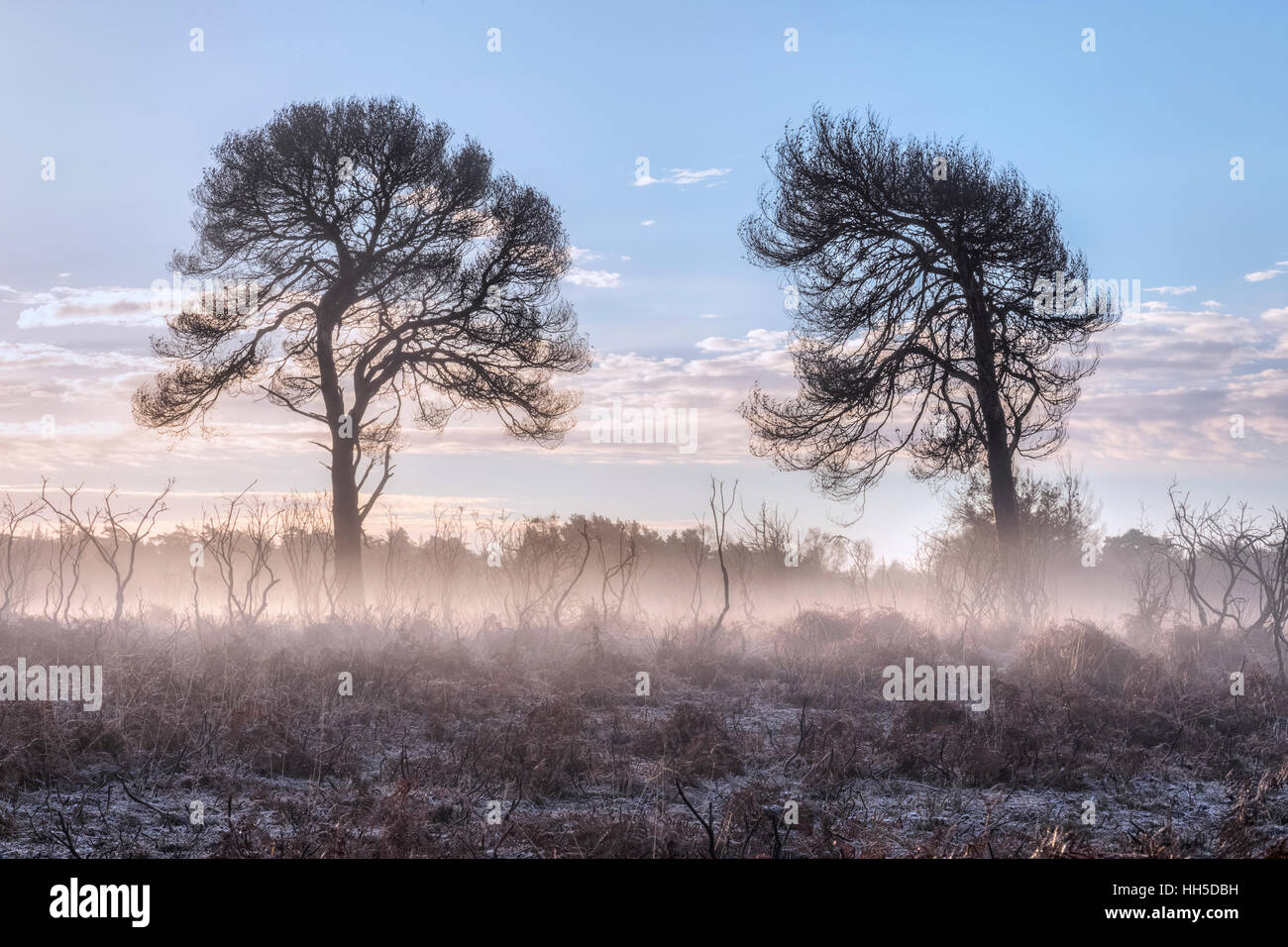 sunrise at Bratley View, New Forest, Hampshire, England - Stock Image