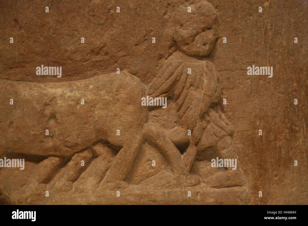 Roman Hispania. Tilling the Land. Relief. 1st C. Sandstone. Man driving a yoke of oxen. Castulo, Linares, Jaen, - Stock Image