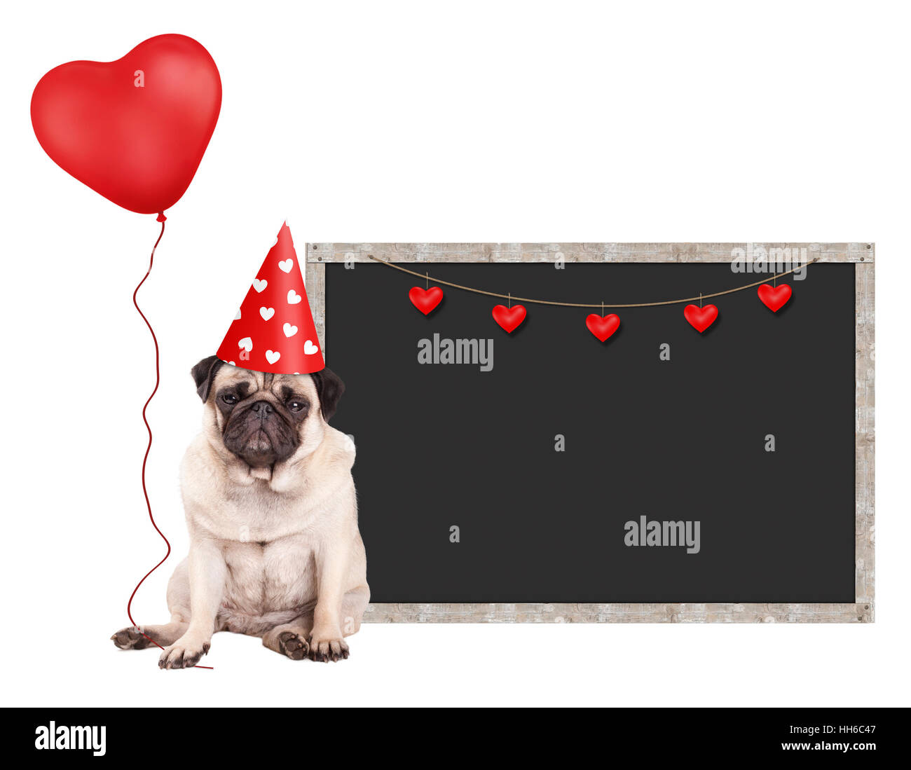 cute pug puppy dog with red party hat, sitting next to blank blackboard sign and holding heart shaped balloon, isolated Stock Photo