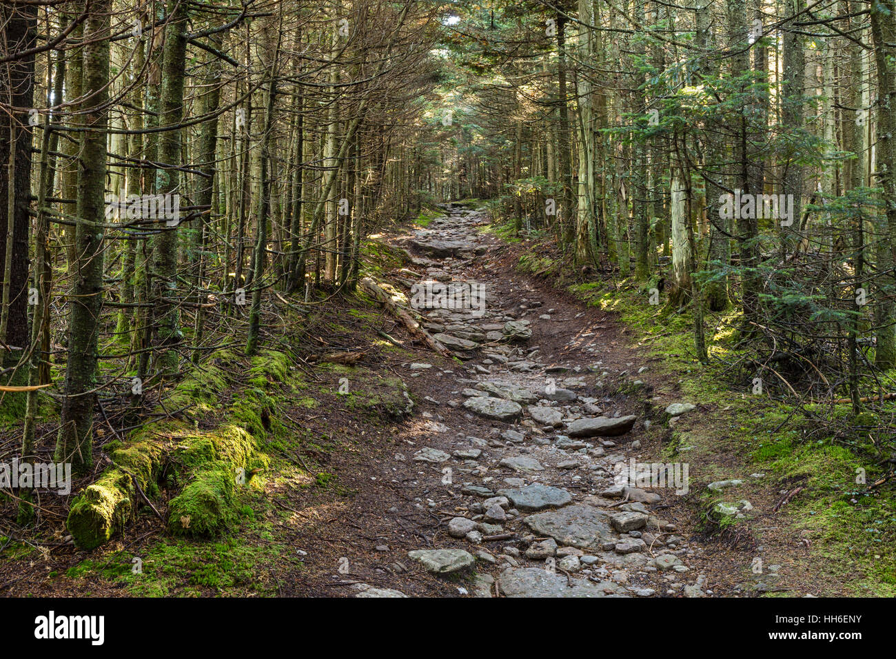 A rocky path through hardwood forest on the trail to Slide Mountain in the Catskills Mountains of New York. - Stock Image