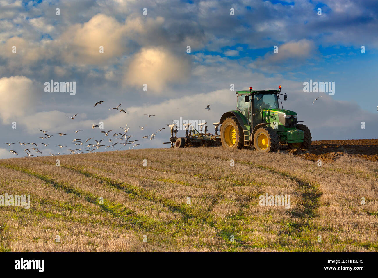 Winter ploughing and gulls following at Cley Norfolk - Stock Image