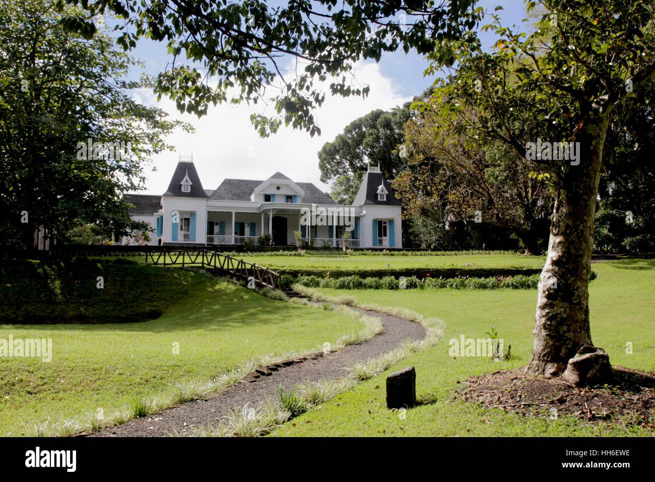 une petite promenade à l'abri des camphriers, plantes exotiques et certains arbres endémiques de l'ile. une petite promenade à l'abri des camphriers, Stock Photo