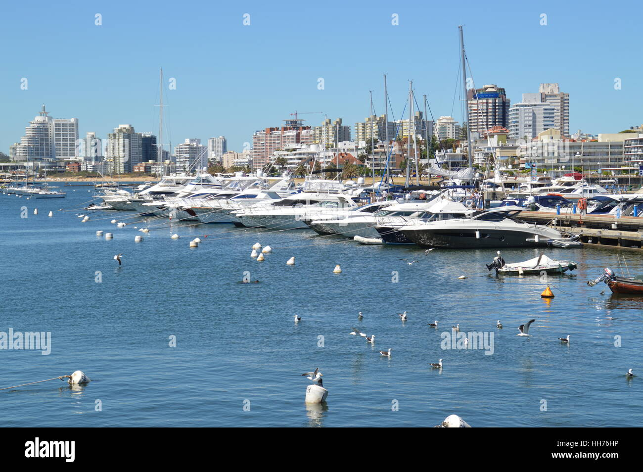 Yachts and boats docked at the scenic port of Punta del Este in Uruguay. - Stock Image