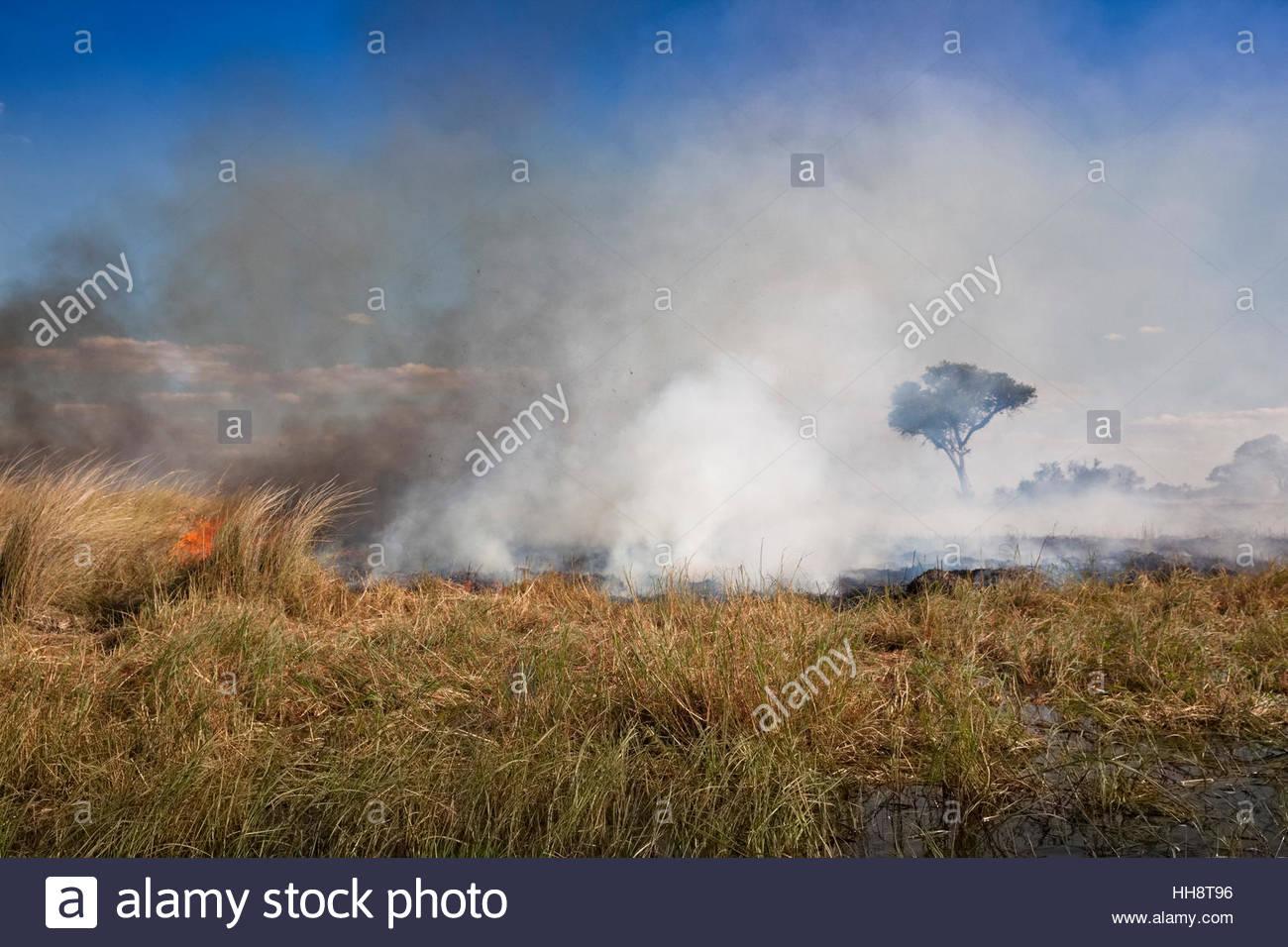 Burning Savannah, Okavango Delta, Botswana Stock Photo