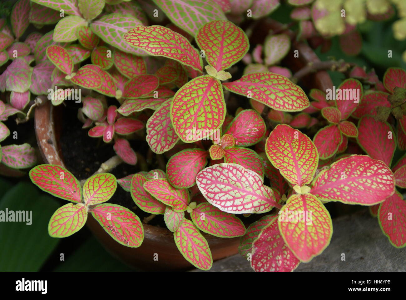 Colorful leaves in a botanical garden. - Stock Image