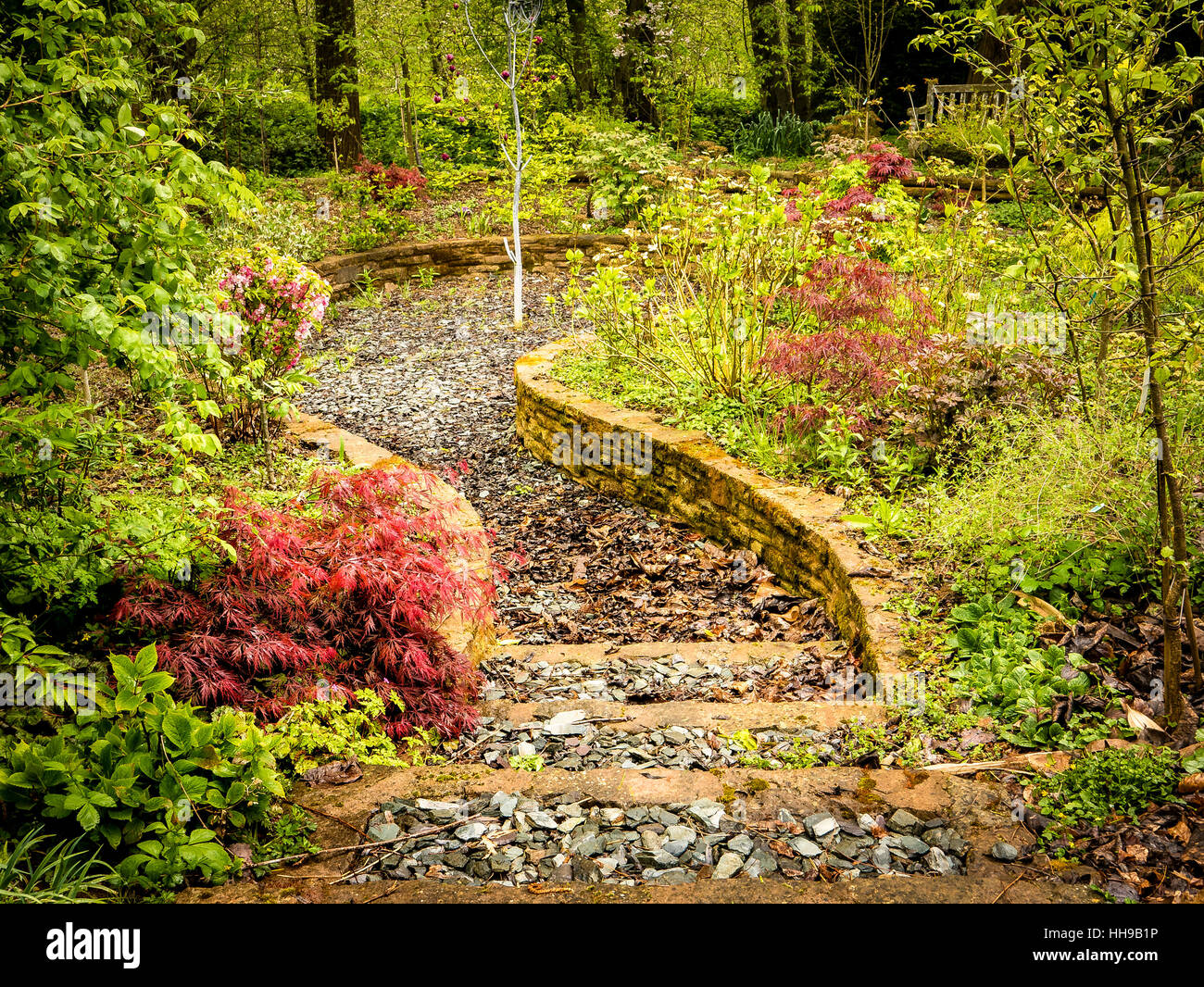 Steps into a small dell in a verdant damp private woodland garden in Herefordshire UK - Stock Image