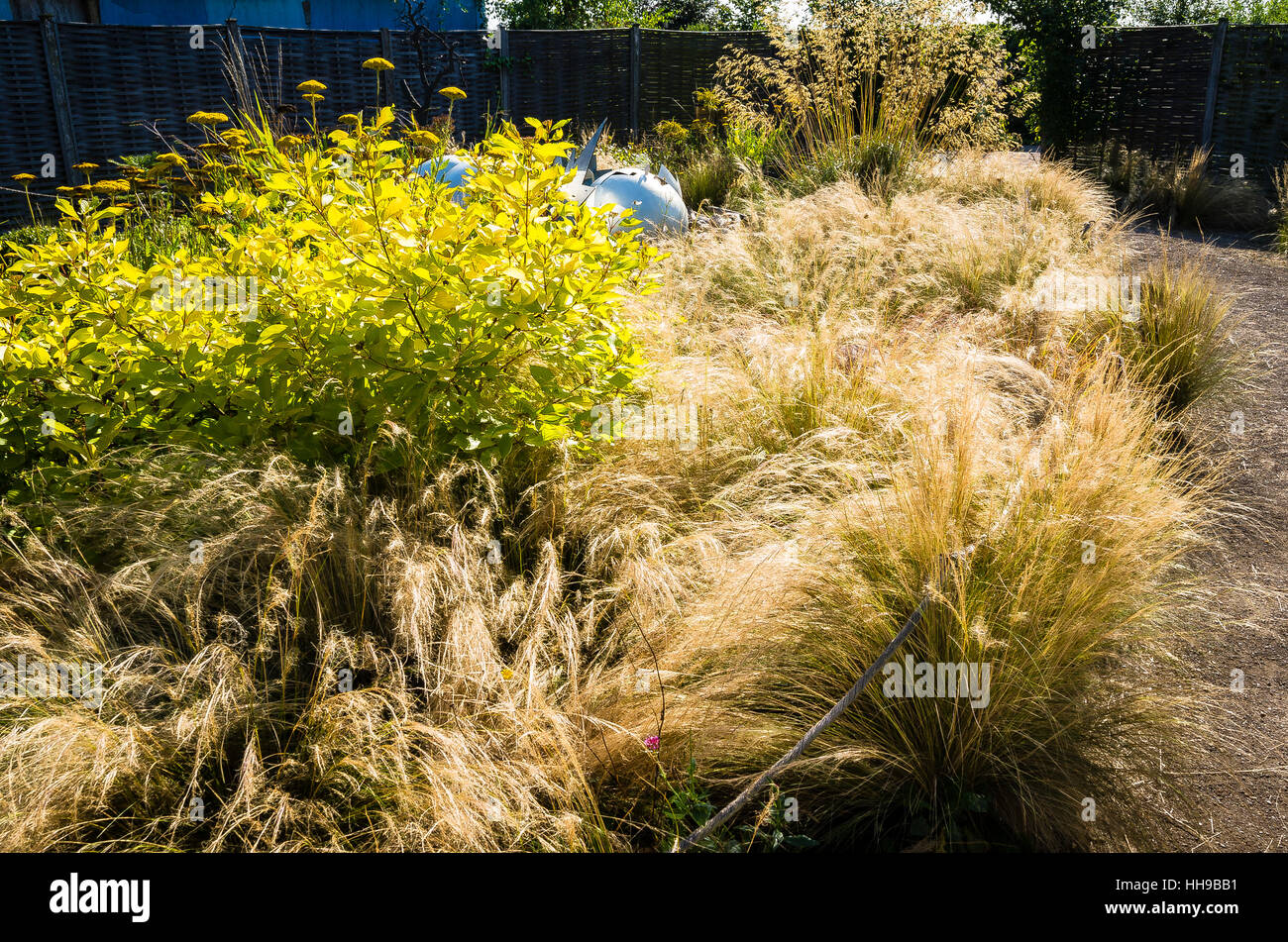 ornamental grasses in a semi wild garden in uk - Wild Garden