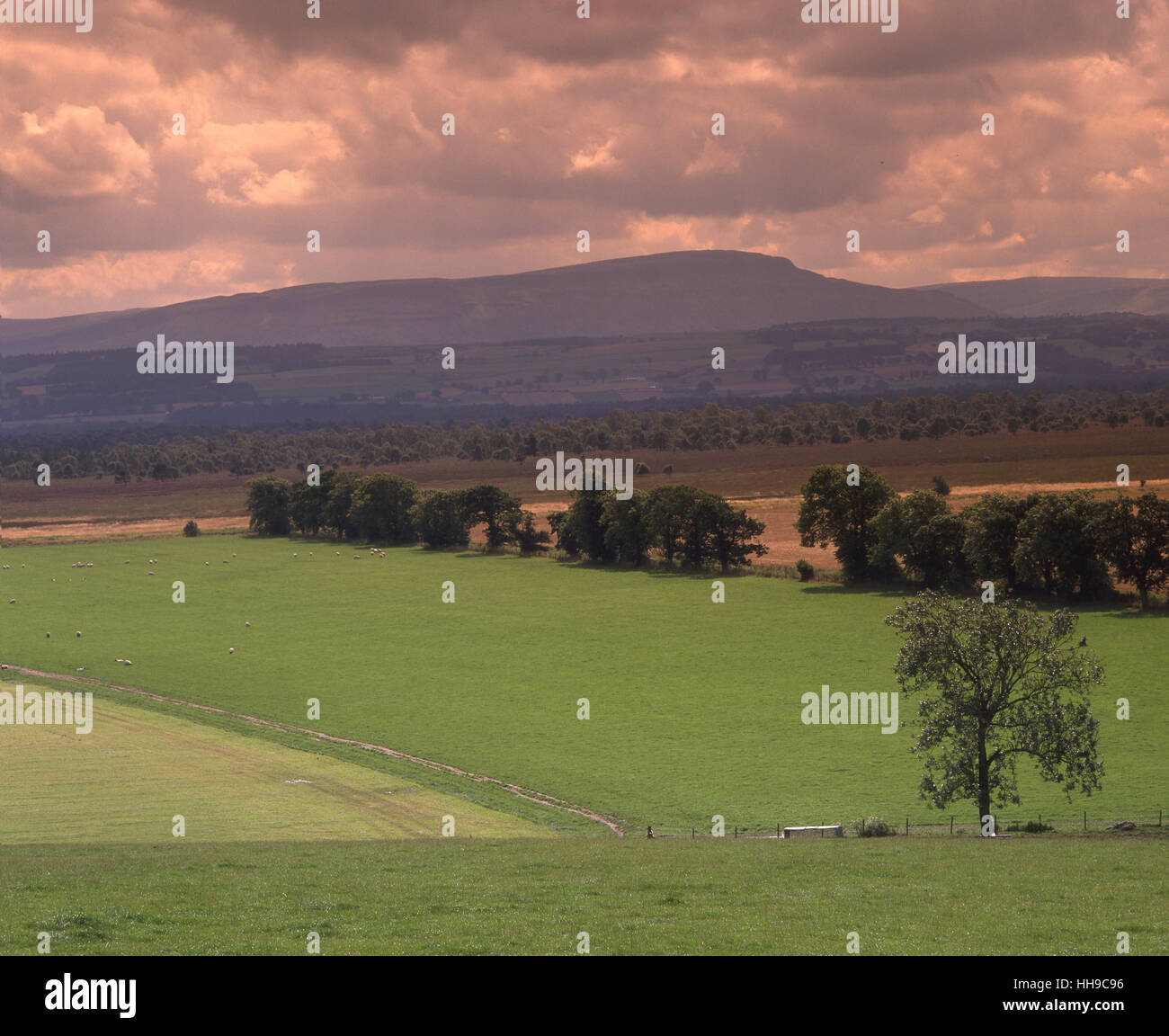Countryside around Thornhill across carron Valley towards the Fintry Hills. Stirling Region. - Stock Image