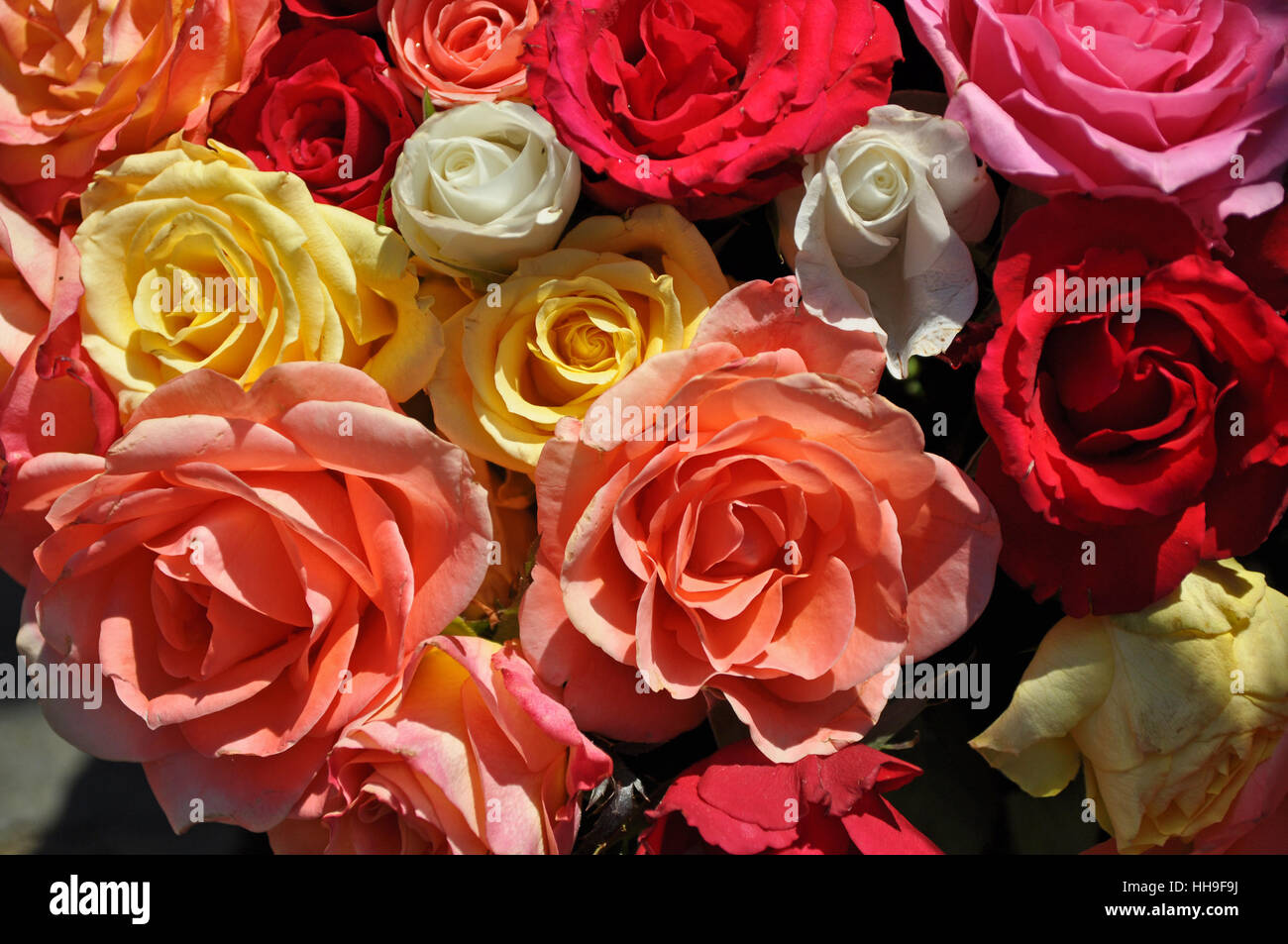 romantic, flower, flowers, plant, blossoms, roses, bouquet, mother ...