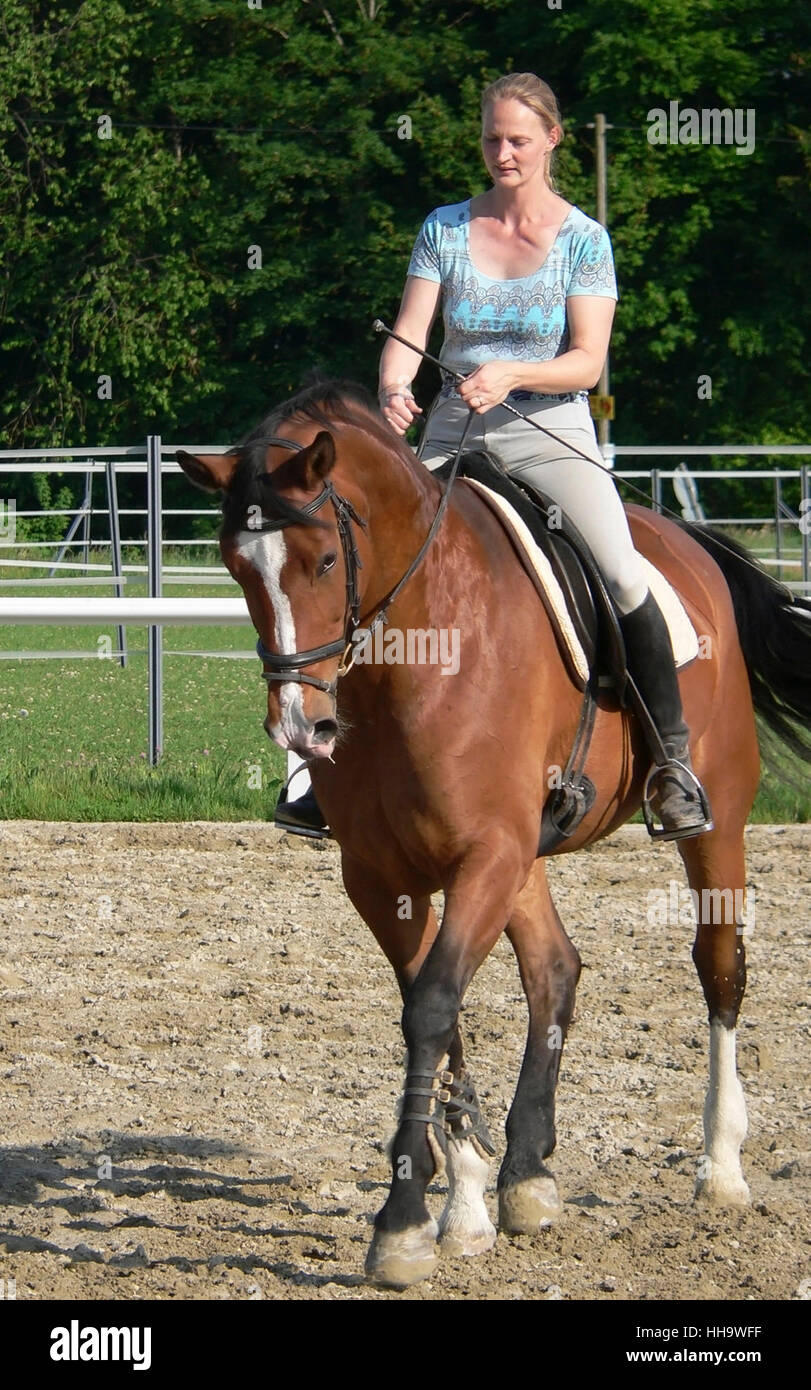 horse riding young woman in a parcours at summer time - Stock Image