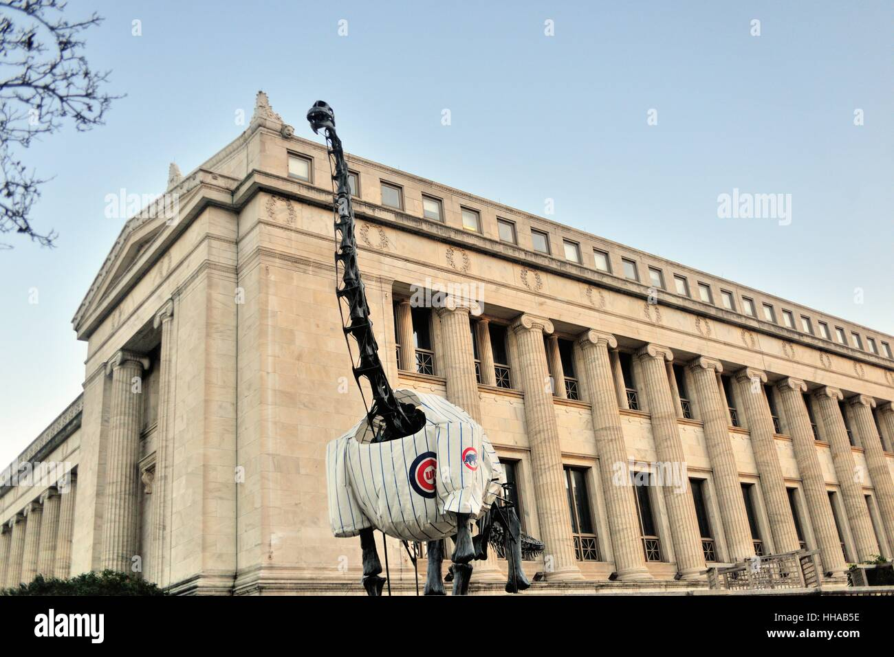 During the 2016 post season, Chicago's Field Museum of Natural History adorned a dinosaur skeletons in a Chicago - Stock Image