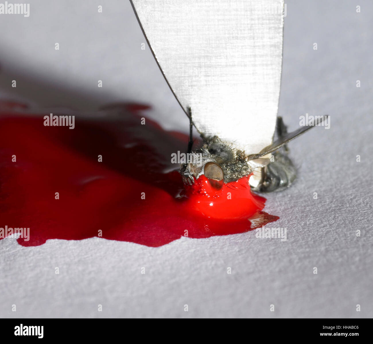 closeup shot showing a weird scene with fly, blade and red paint... - Stock Image