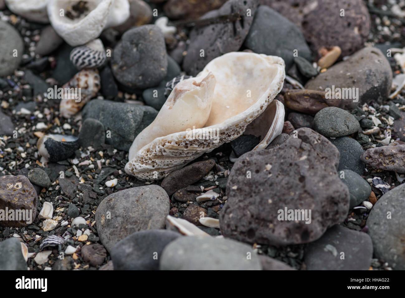 seashell polished by waves on a rocky beach Stock Photo