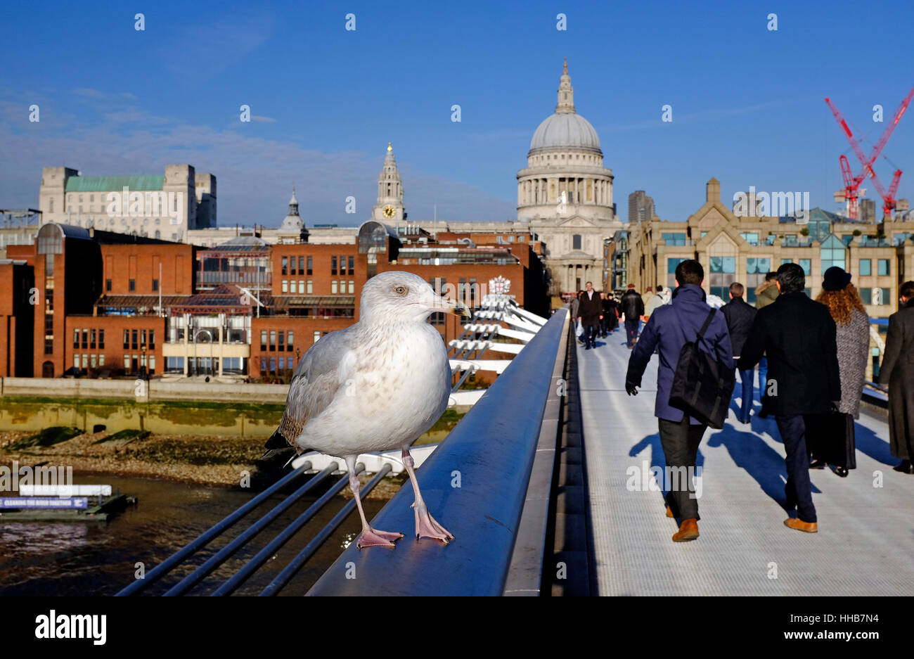 gull sitting on handrail, millennium bridge, london, england - Stock Image