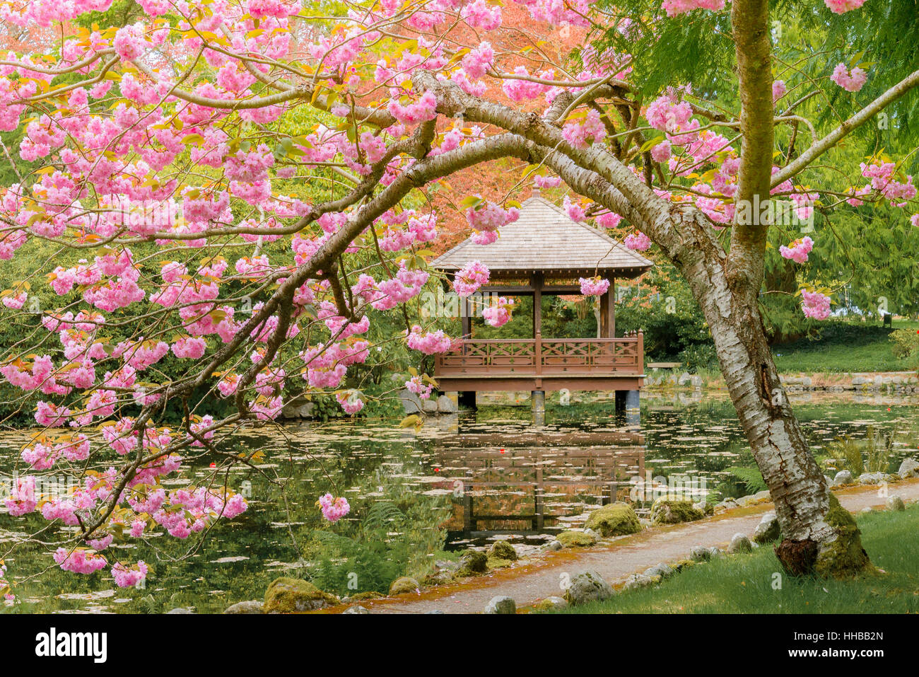 Japanese Garden Cherry Blossom Stock Photos & Japanese Garden Cherry ...