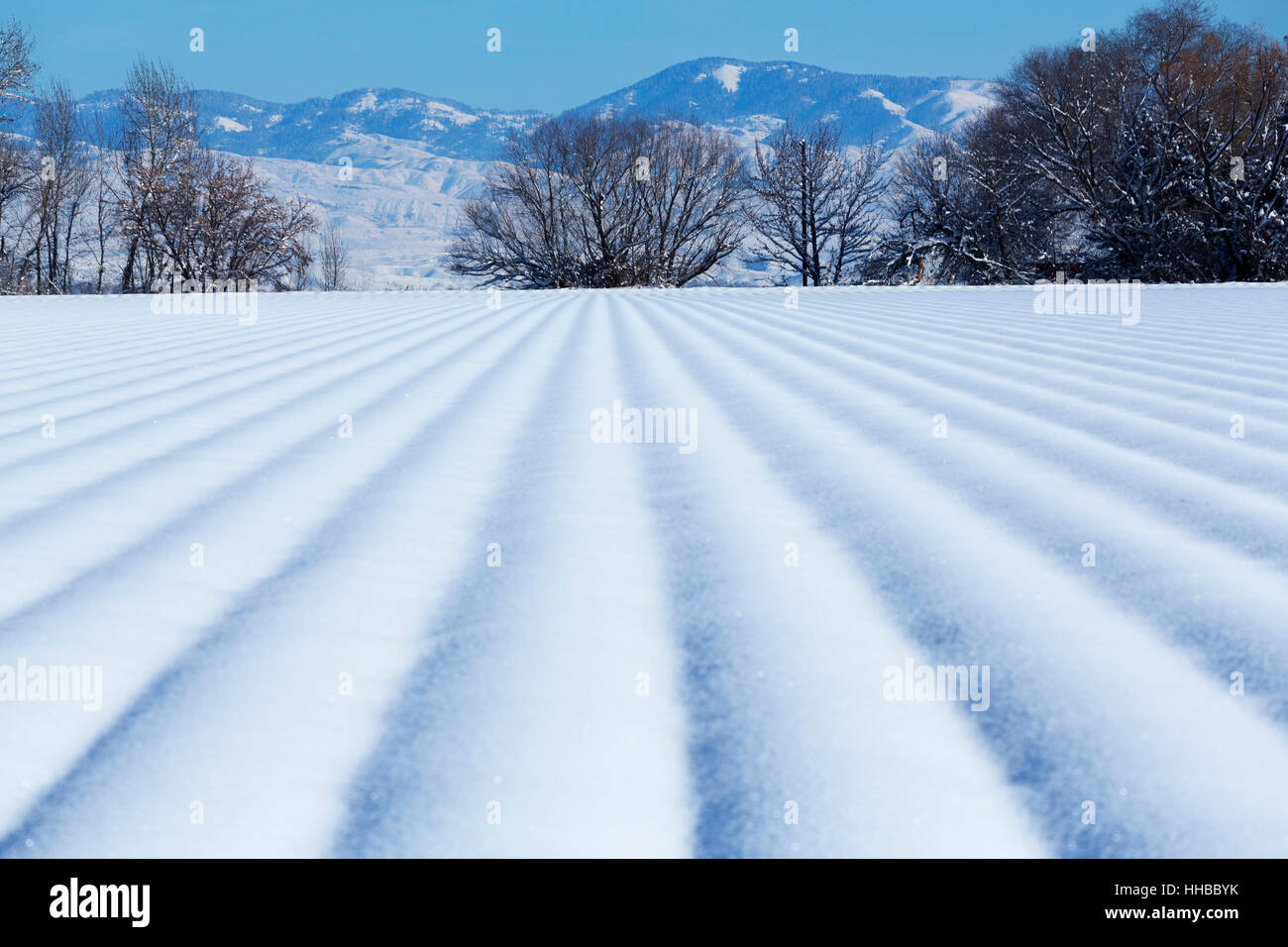 Leading lines in fresh snow - Stock Image