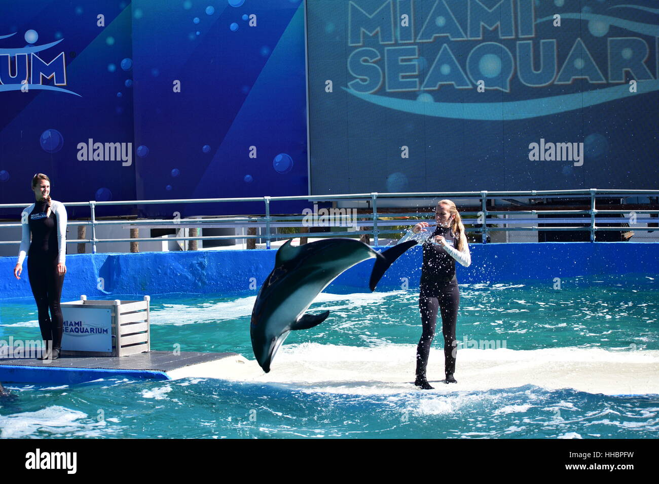 Miami, Florida - USA - January 08, 2016:Miami, Florida - USA - January 08, 2016:The white dolphin Show - Stock Image