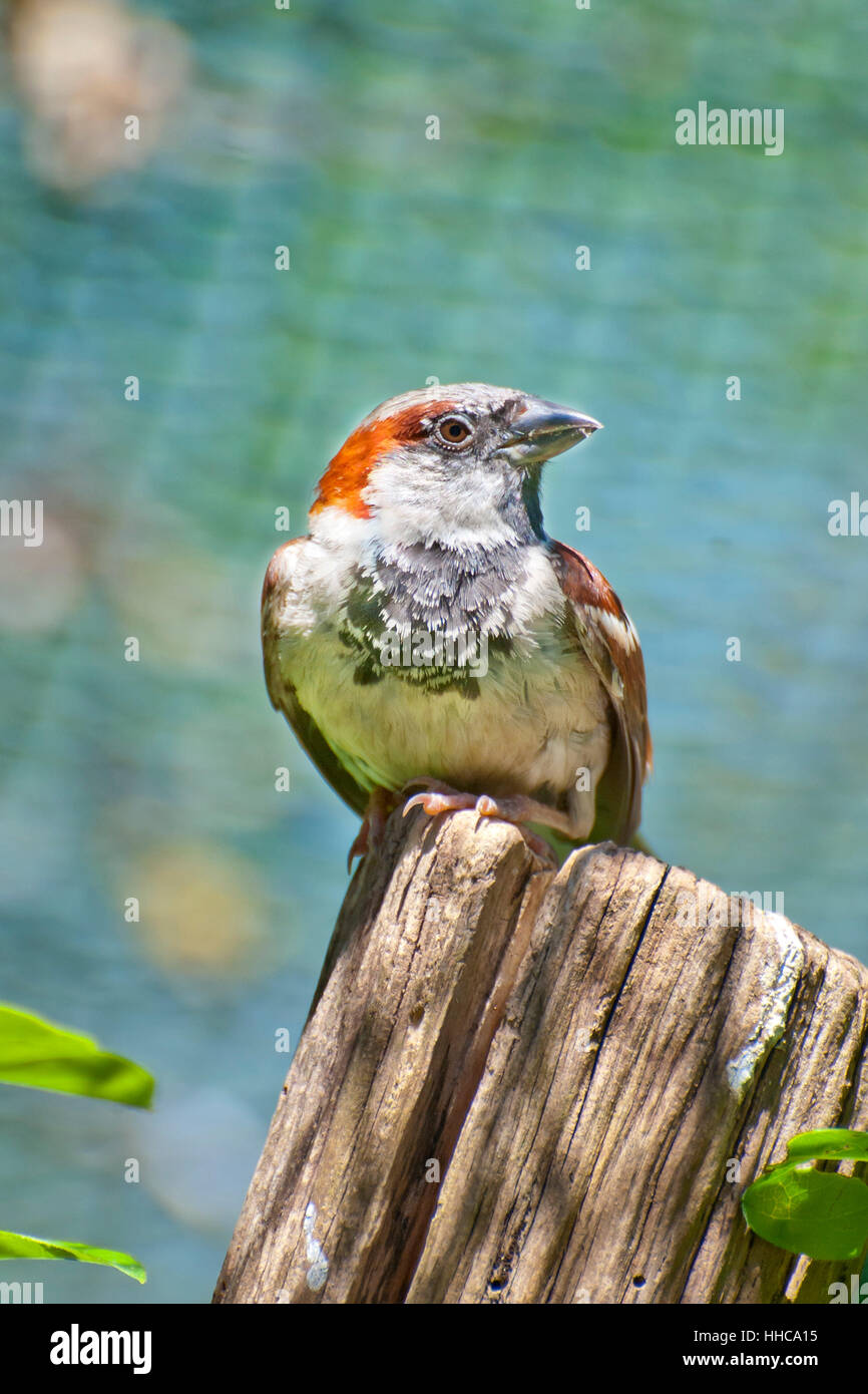 bird, eye, organ, watchful, birds, look, glancing, see, view, looking, peeking, - Stock Image