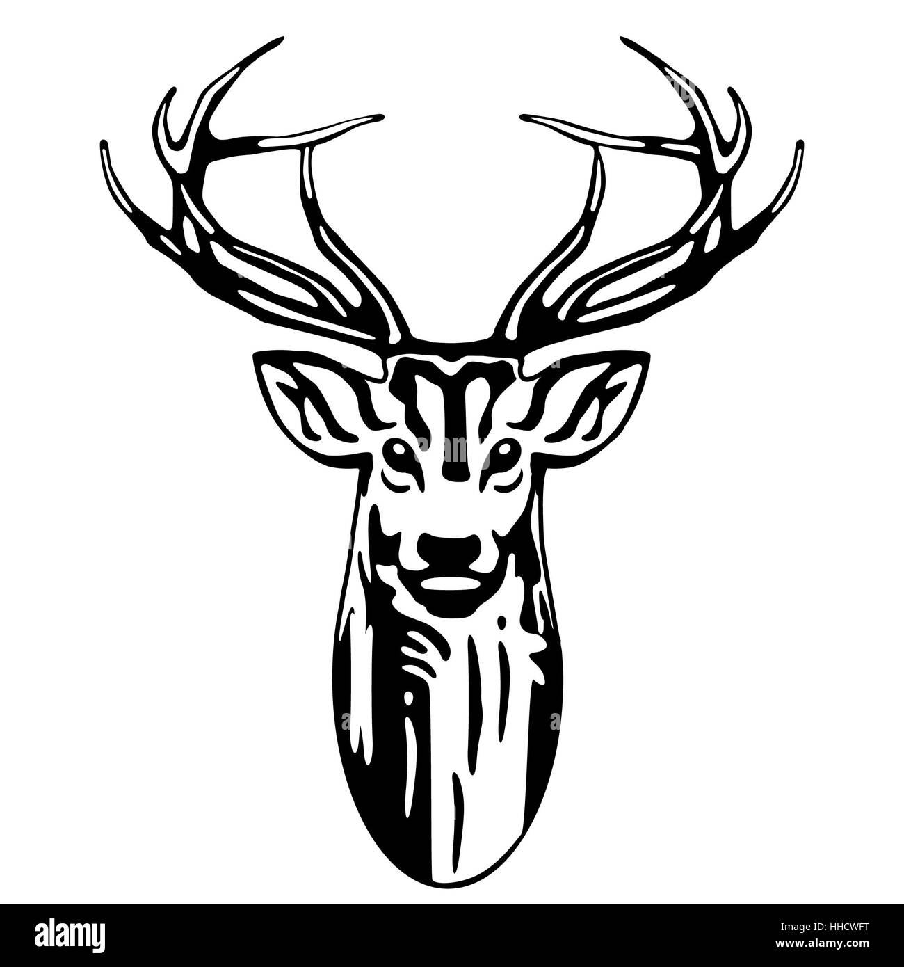 reindeer antlers of a stag Stock Photo