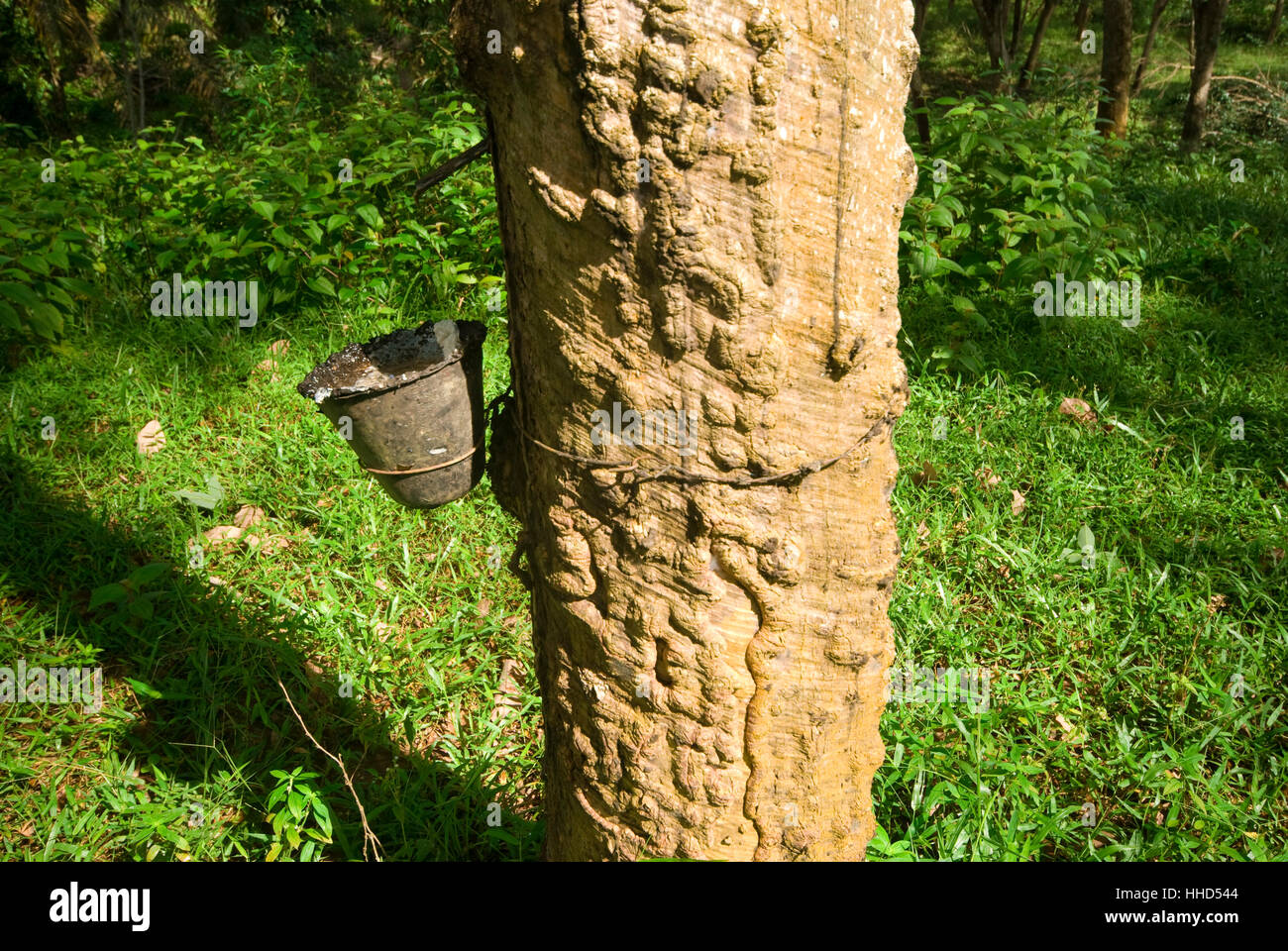 Environment Enviroment Tree Trees Industry Industrial