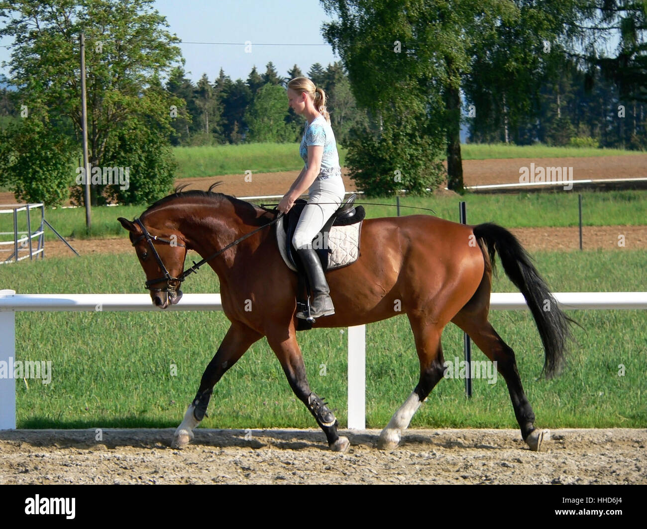 horse riding woman sideways in a parcours at summer time - Stock Image
