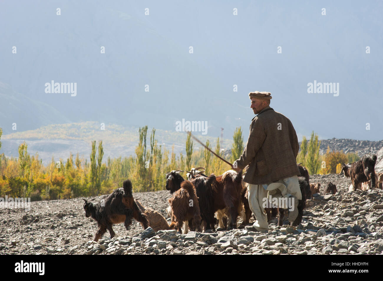 A shepherd in the remote Bagrot Valley, Gilgit-Baltistan, Pakistan - Stock Image
