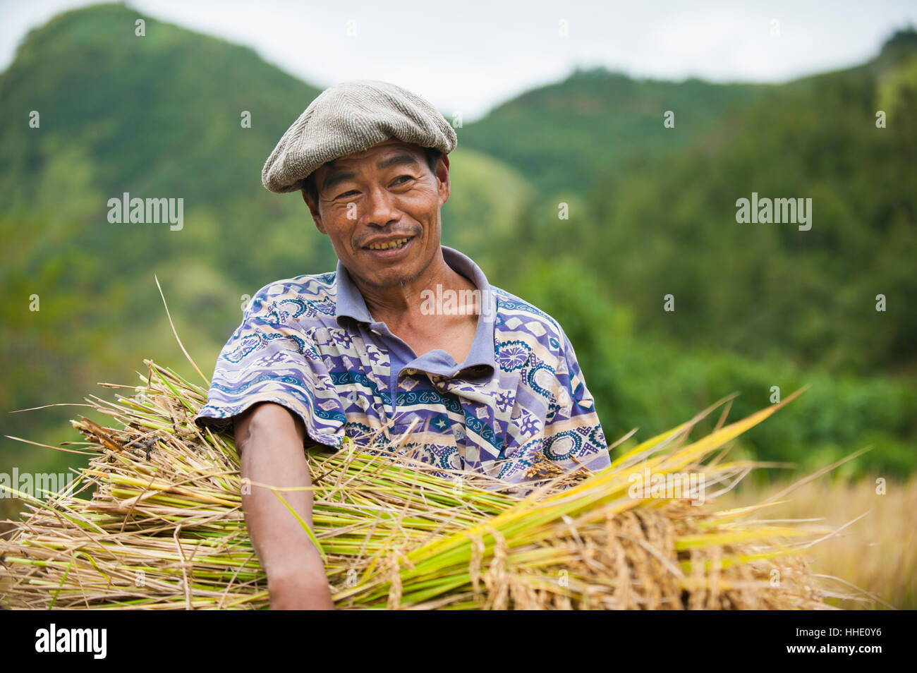 A man clutches a bundle of freshly harvested rice in Manipur, India - Stock Image