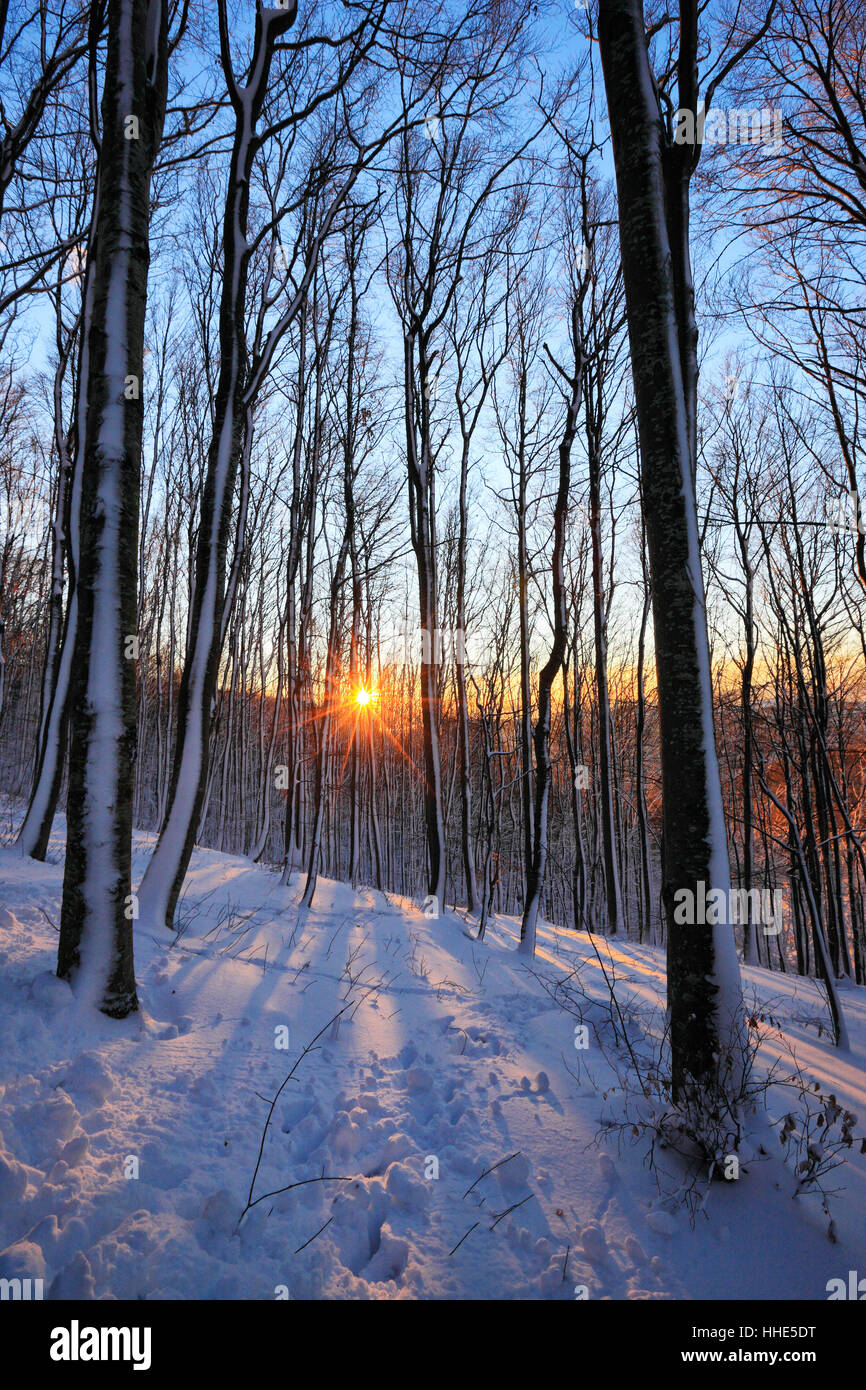 Sun star in snow cowered forest - Stock Image