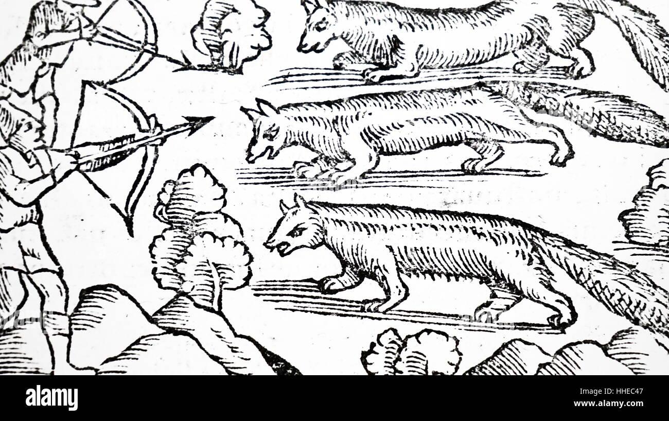 Hunting martens for pelts. From Olaus Magnus Historia de geniibus septentrionalibus, Antwerp, 1562 - Stock Image