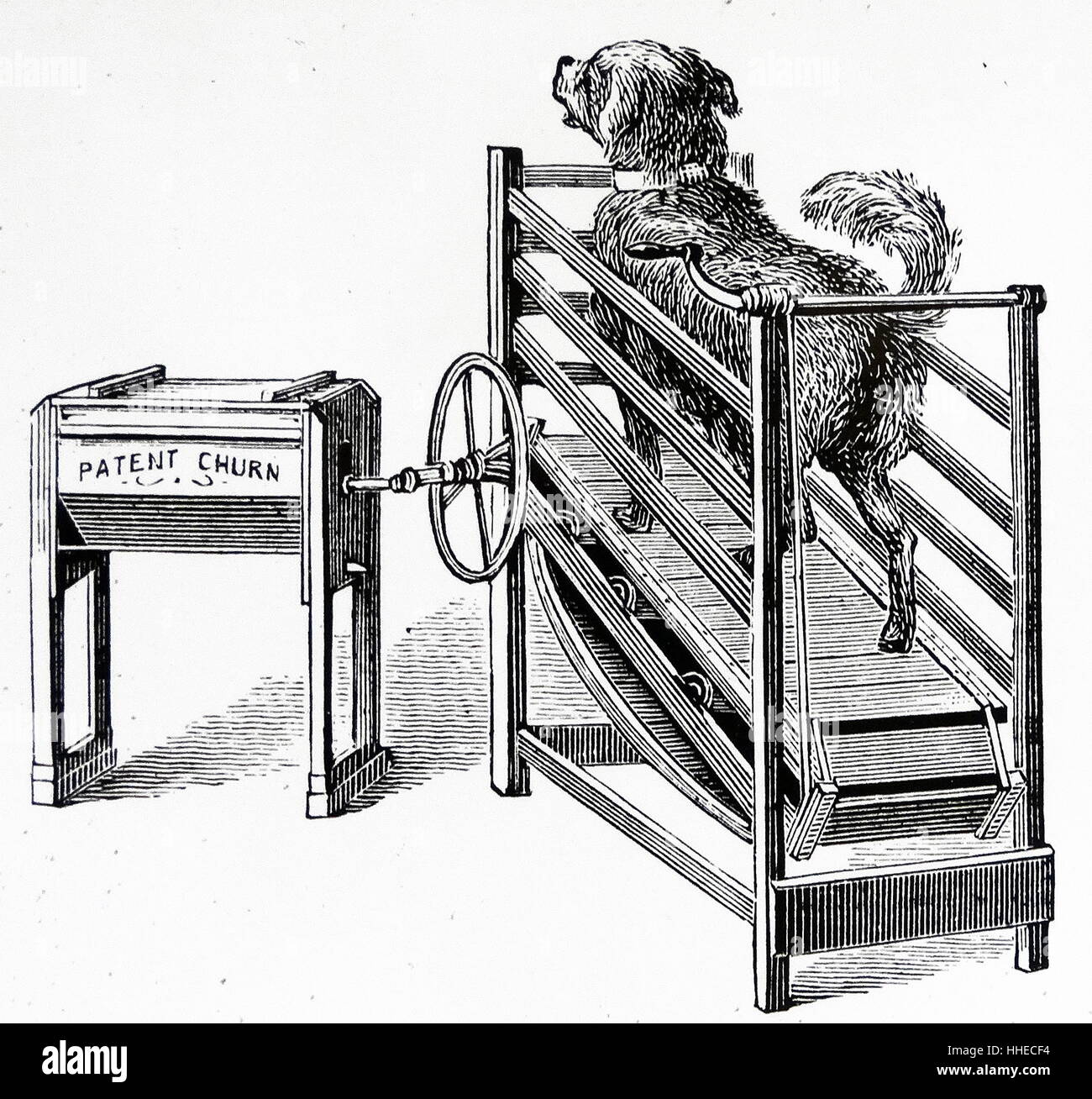 Butter churn powered by on a treadmill. From a Dairy Farm 1885 Stock Photo
