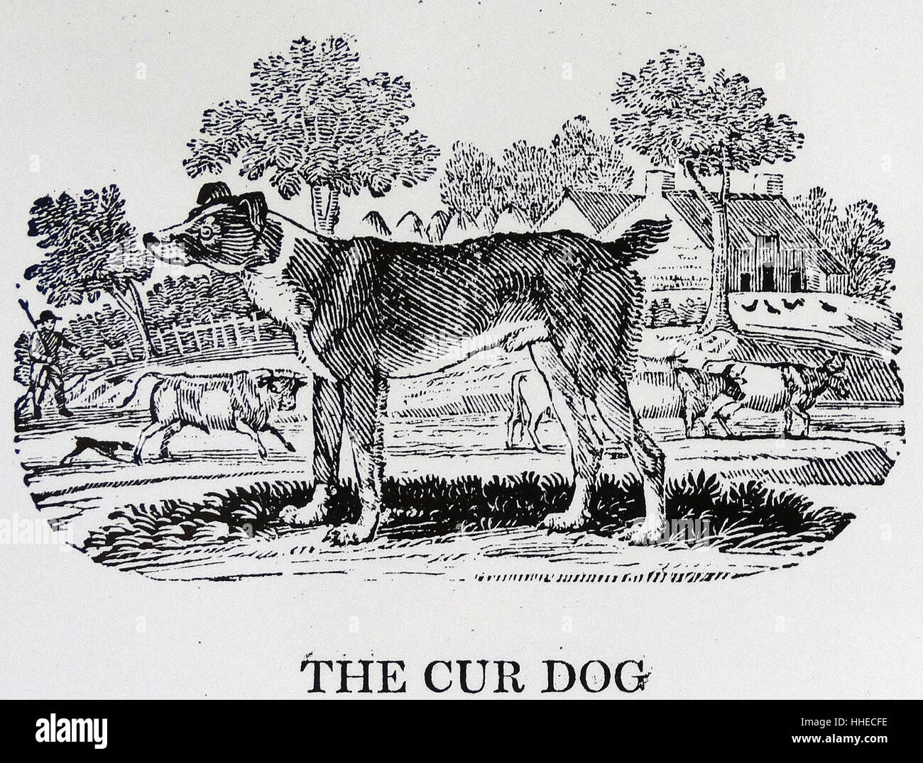 A Cur Dog. From Thomas Bewick A General History of Quadrupeds, Newcastle upon Tyne, 1790. - Stock Image
