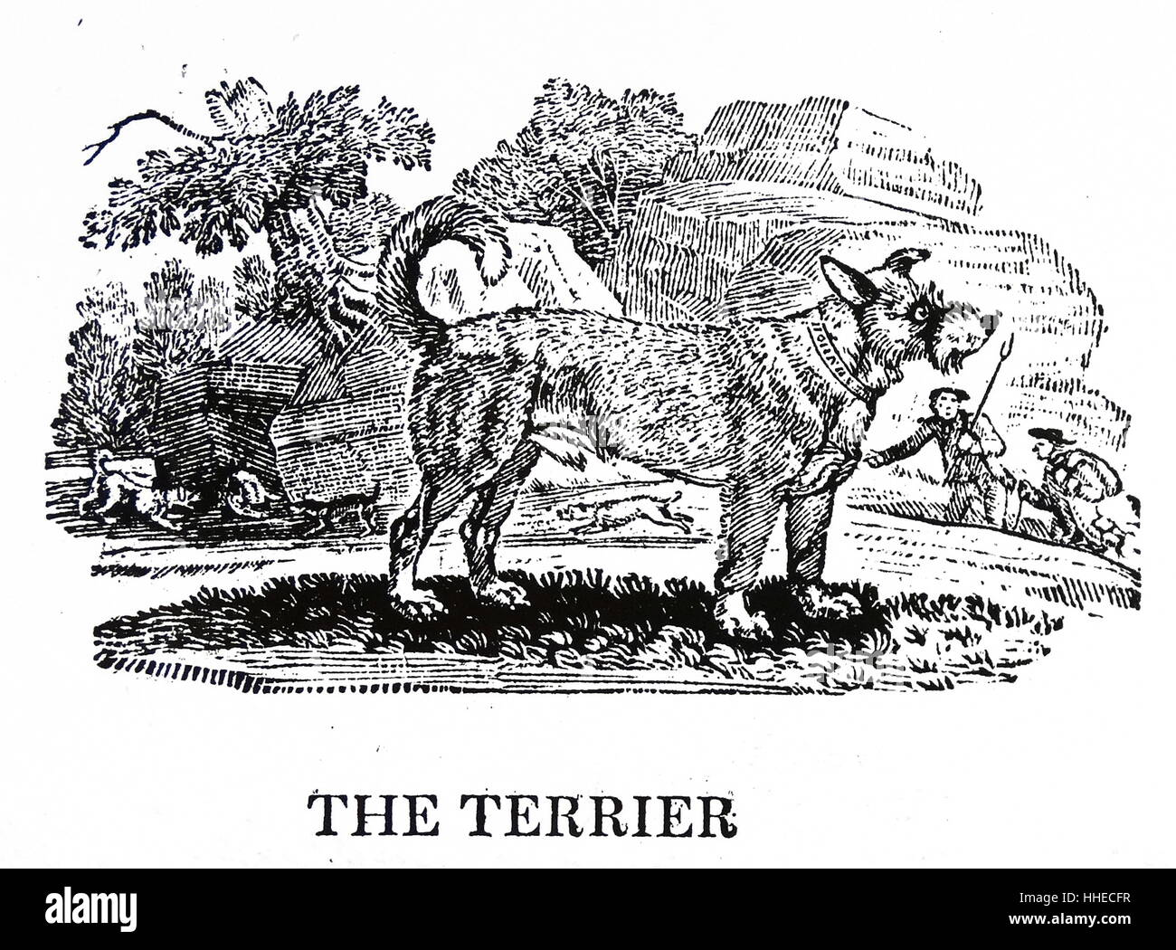 Terrier dog. From Thomas Bewick A General History of Quadrupeds, Newcastle upon Tyne, 1790. - Stock Image