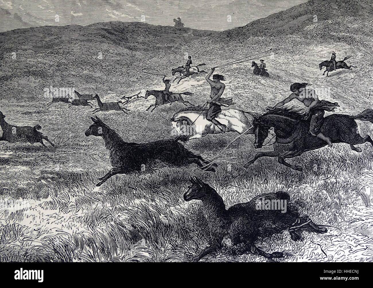 Hunting Guanaco (Lama guanaco) on the Pampas. - Stock Image