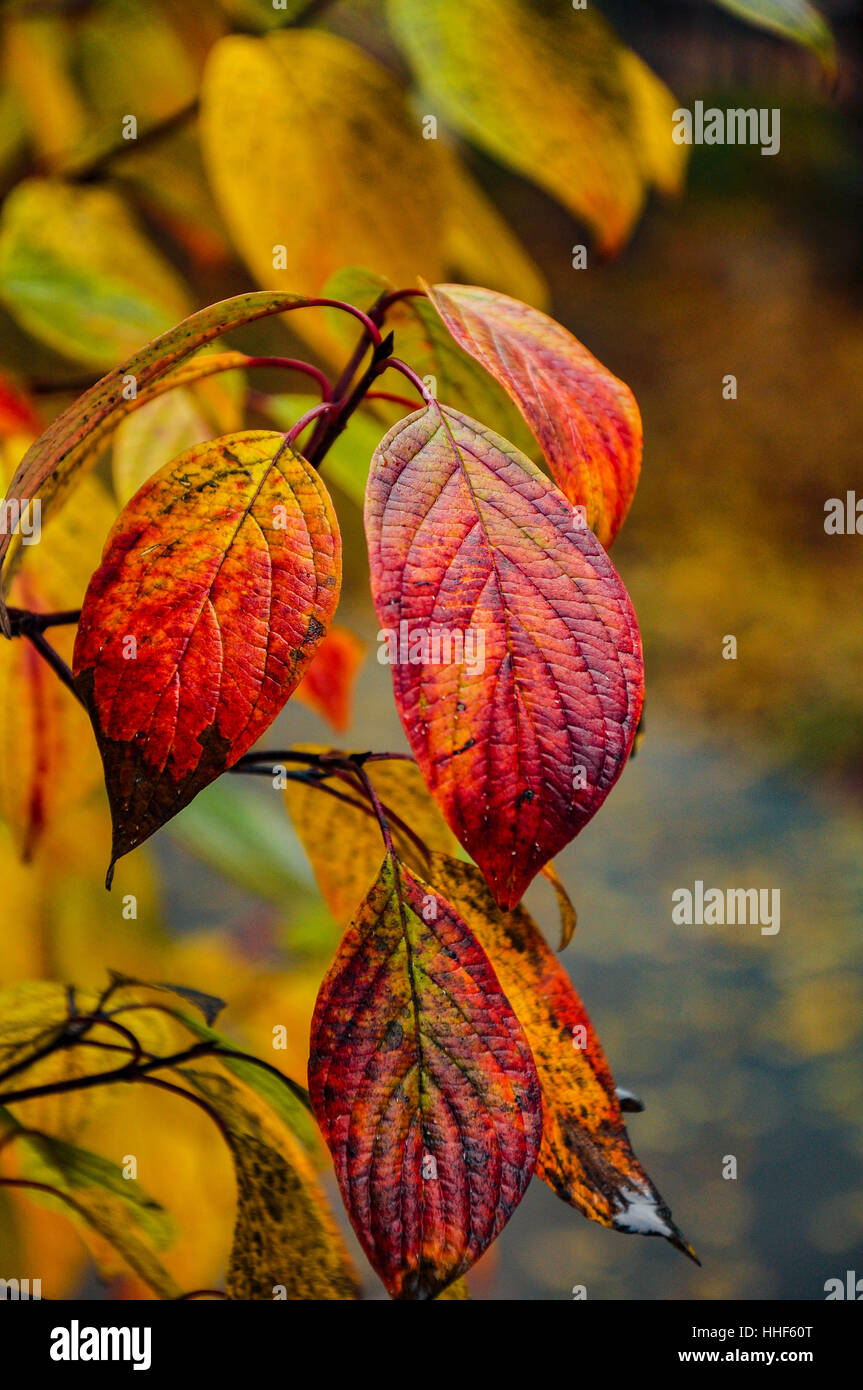 Sketches from the autumn yellow leaves. Stock Photo