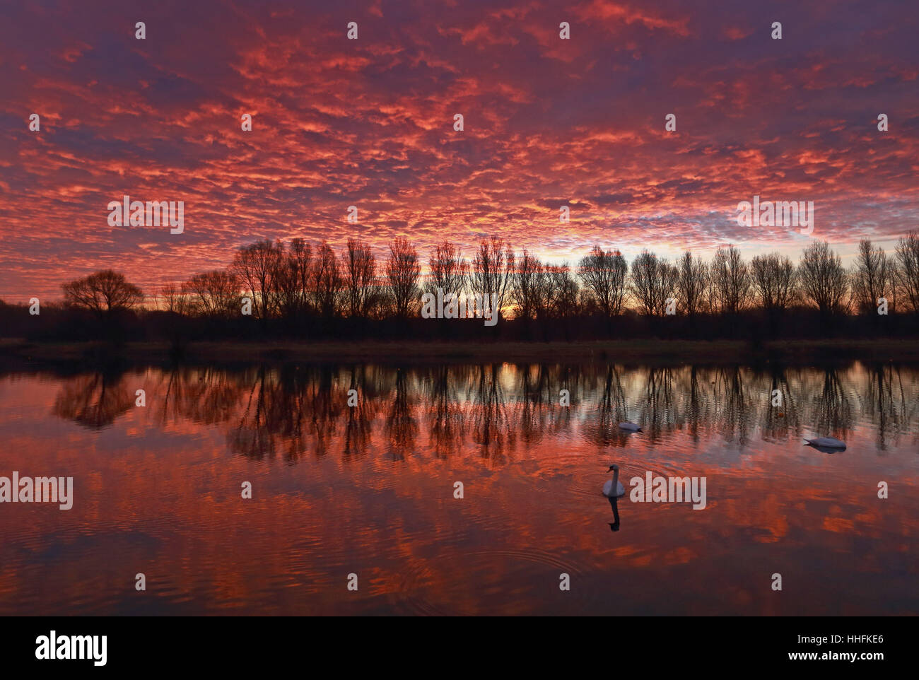 Peterborough, UK. 18th January 2017. The sky looked on fire this morning, as it made the clouds glow red, as swans - Stock Image
