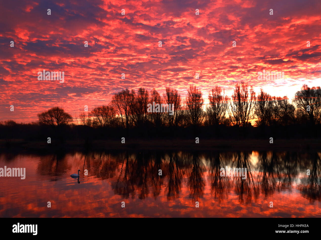 Peterborough, UK. 18th January 2017. The sky looked on fire this morning, as it made the clouds glow red, as a swan - Stock Image