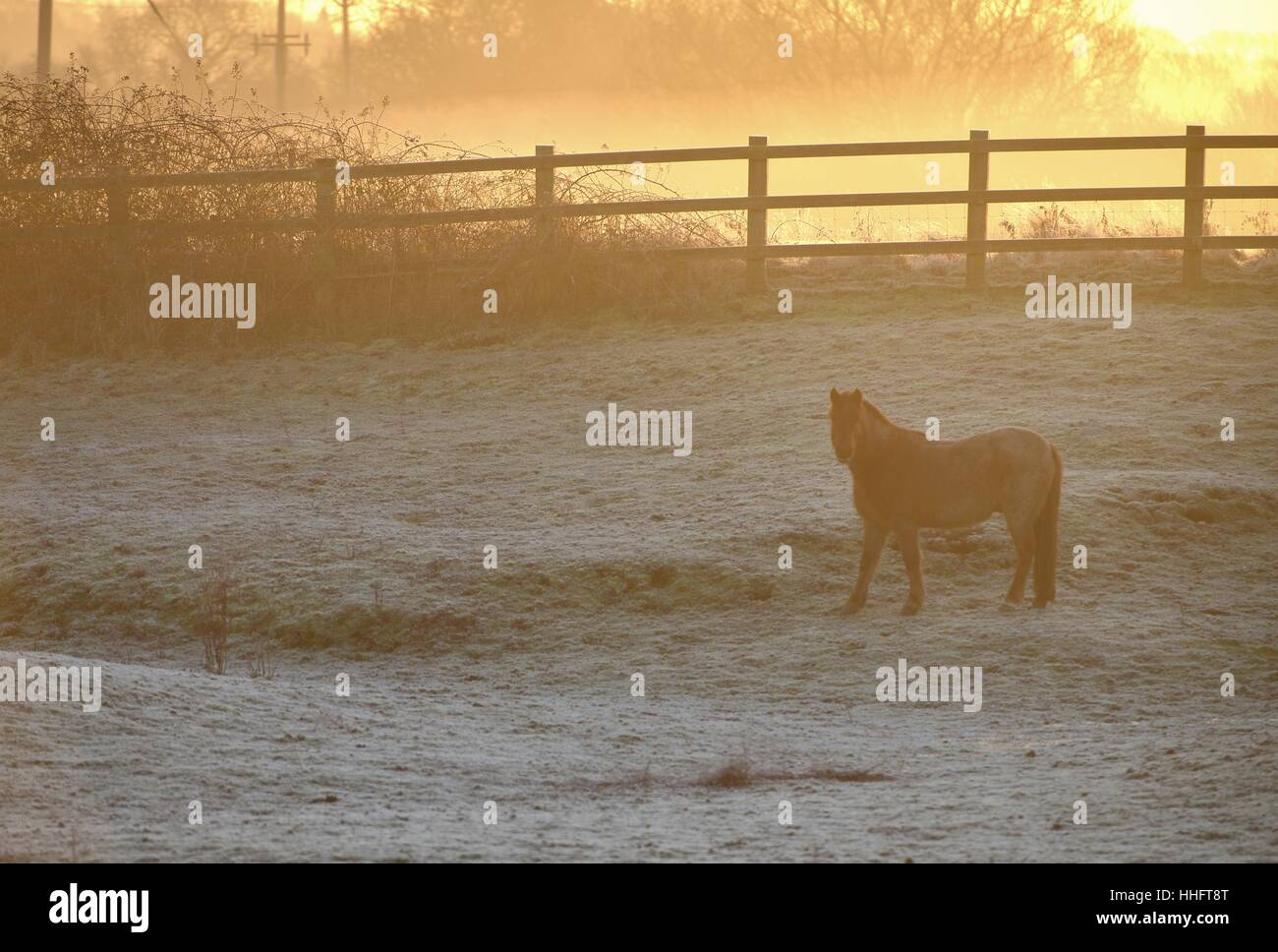 Firle, East Sussex, UK. 19th January 2017. Cold start to the day in East Sussex as temperatures stay well below - Stock Image