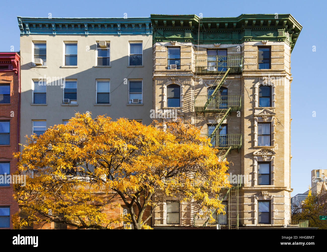 Colorful fall tree with golden leaves in front of an old apartment building on 2nd Avenue in the East Village of - Stock Image