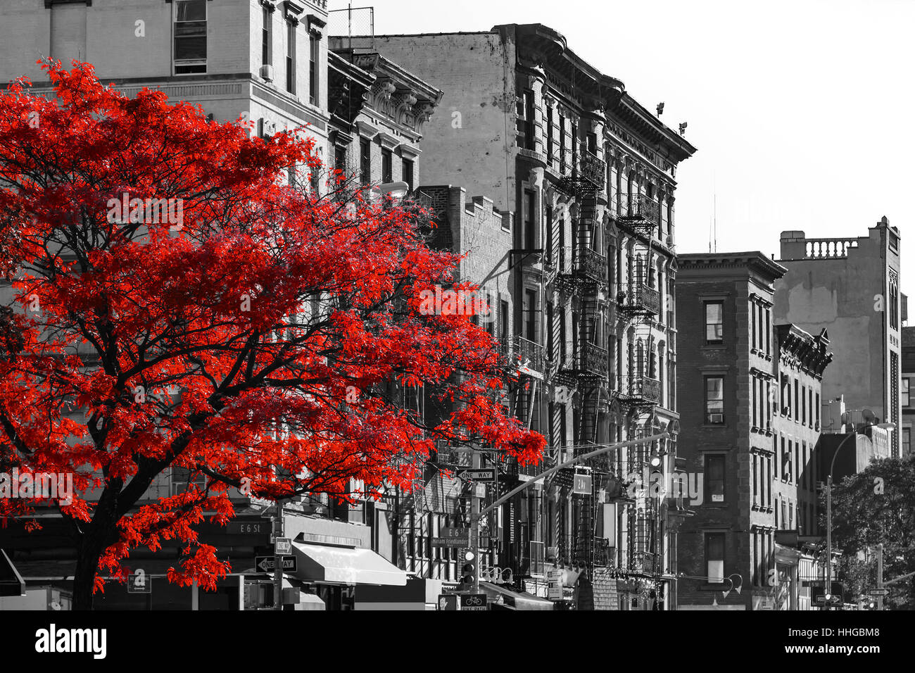 Red fall tree in black and white nyc street scene on 2nd avenue in the east village of manhattan new york city
