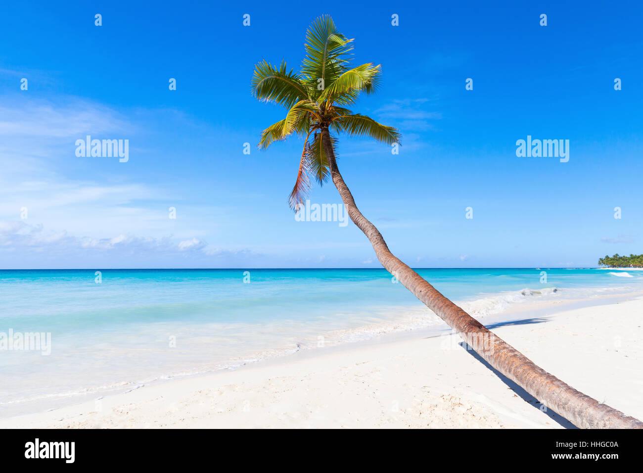 Caribbean Sea, Dominican republic, Saona island. Coconut palm grows on white sandy beach - Stock Image