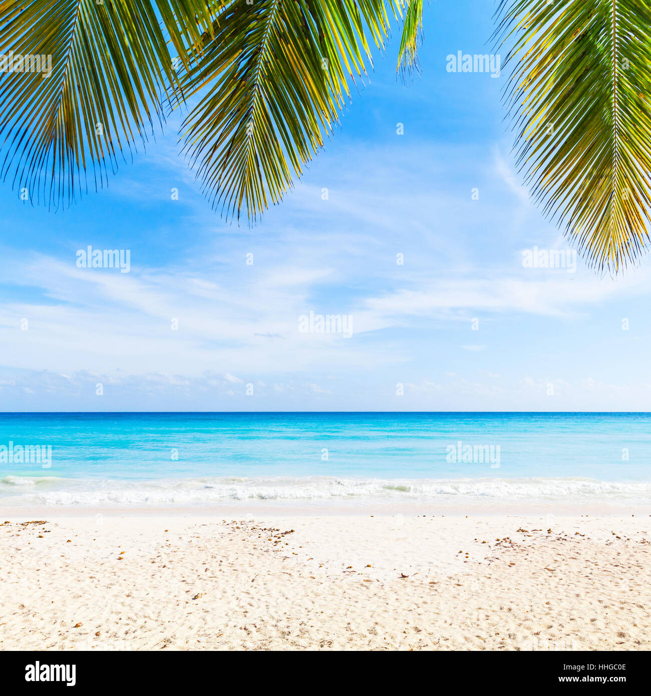 Exotic Beach: Tropical Beach Background, White Sand, Azure Water And