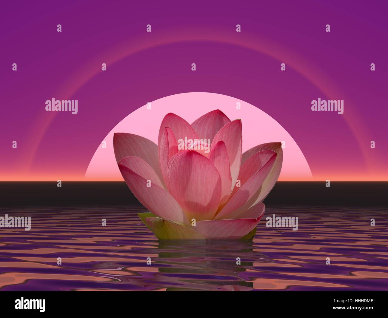 Lily Pink Mist Stock Photos Lily Pink Mist Stock Images Alamy