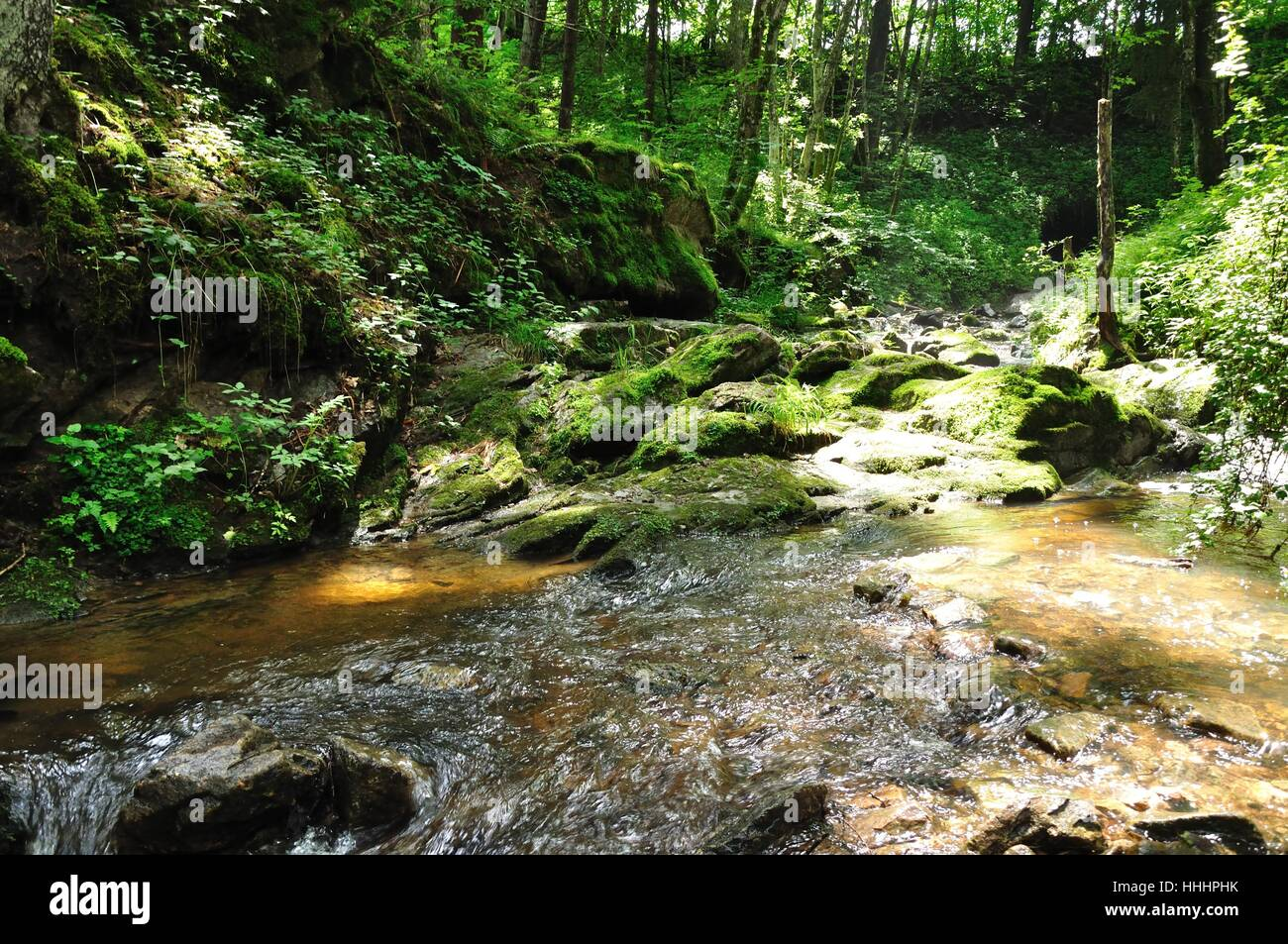 hike, go hiking, ramble, stream, black forest, natural preserve, migrate, - Stock Image
