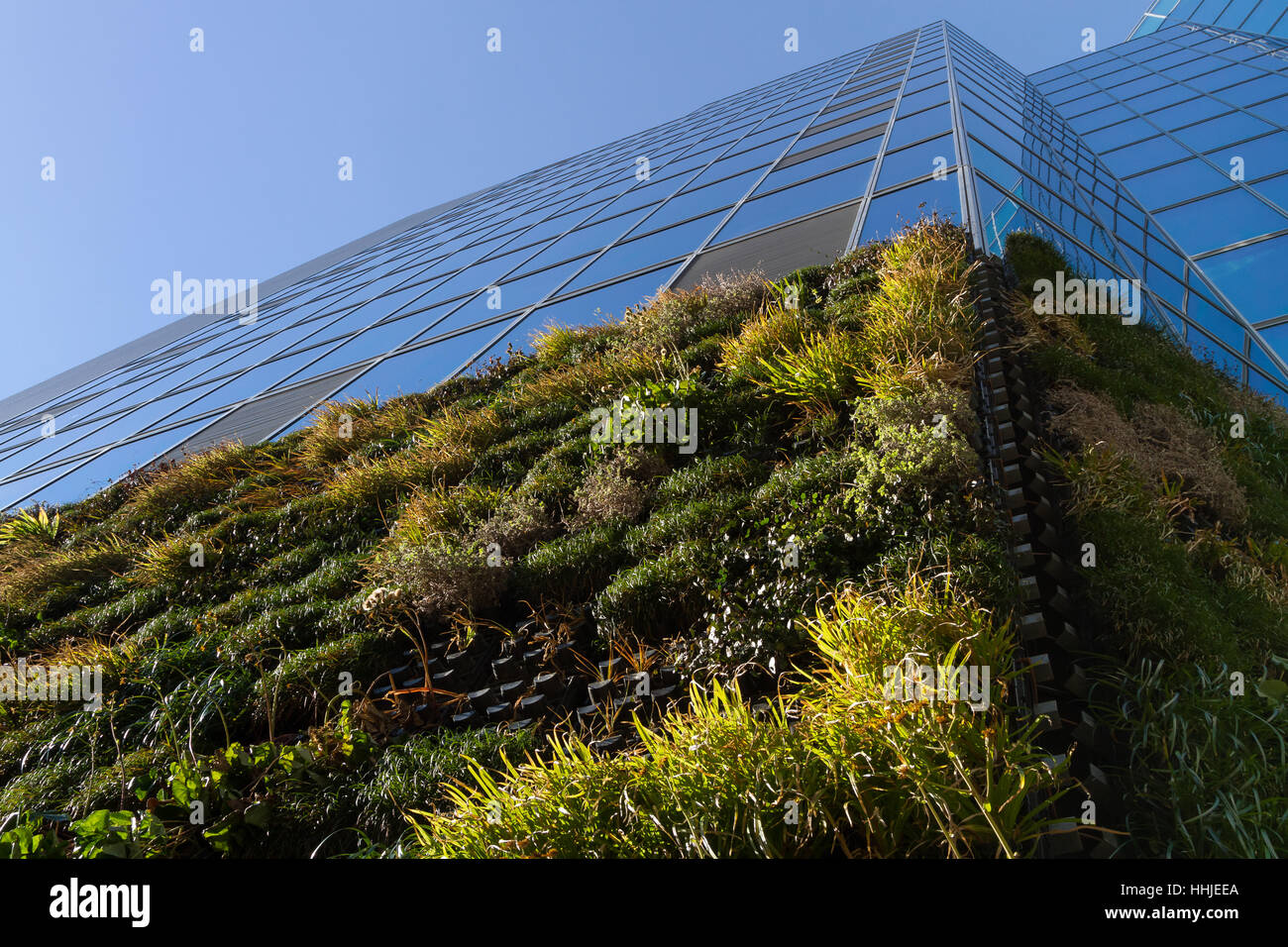 A office building using plants on the walls (vertically vegetated) to combat heat island in summer and insulation - Stock Image