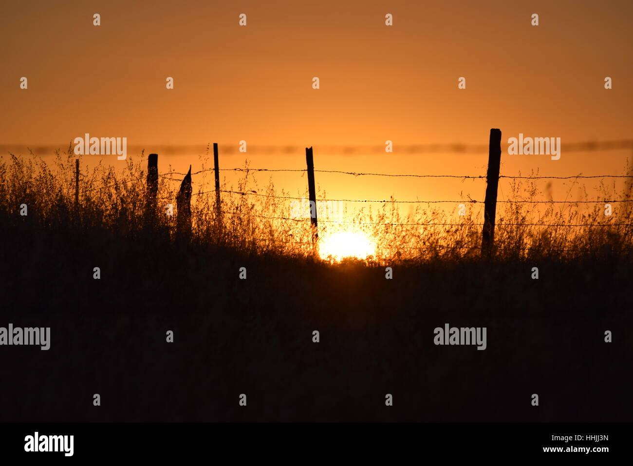 A barbed-wire fence and tall grass silhouetted by the setting sun - Stock Image