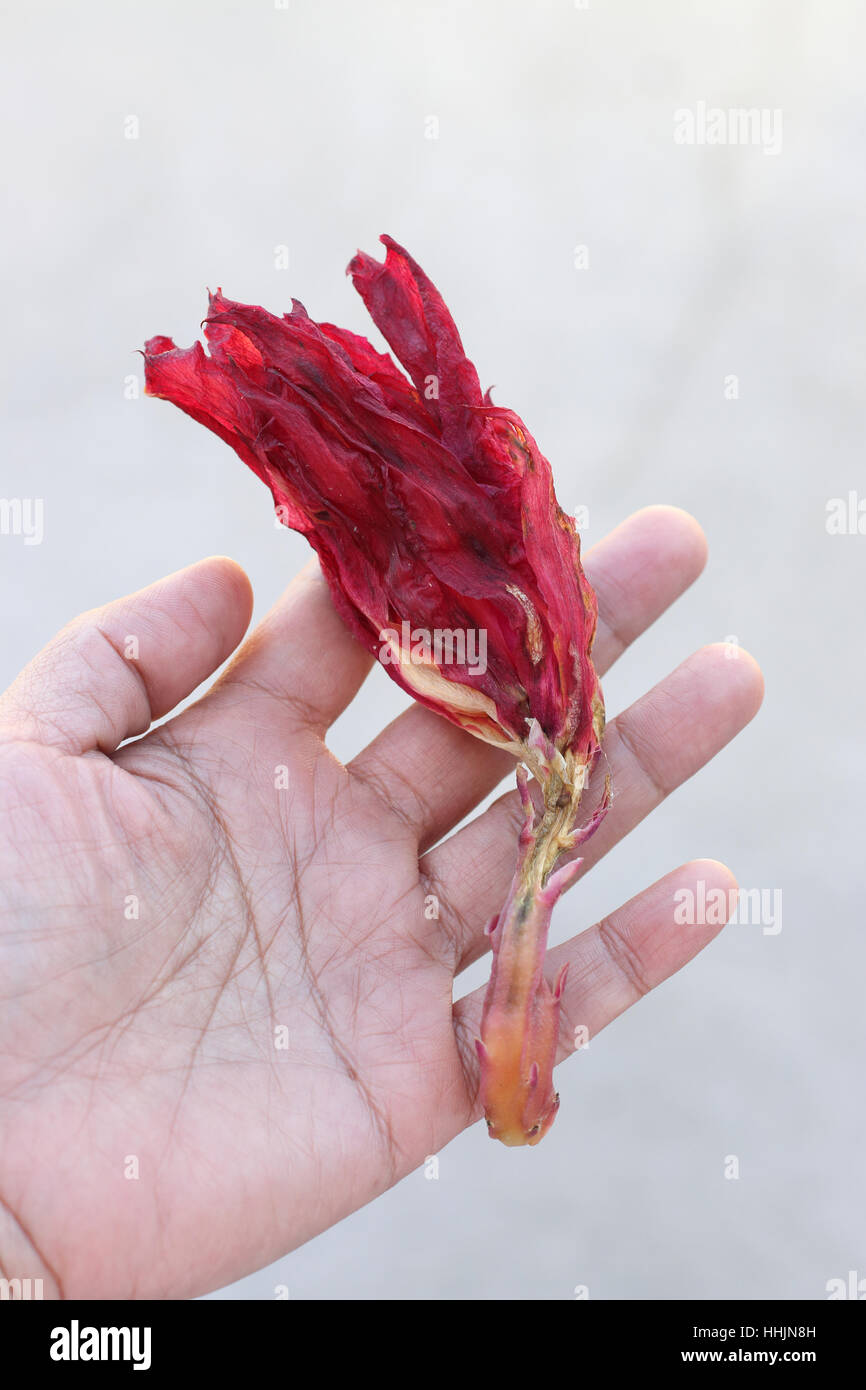 Dying Bloom Stock Photos & Dying Bloom Stock Images - Alamy