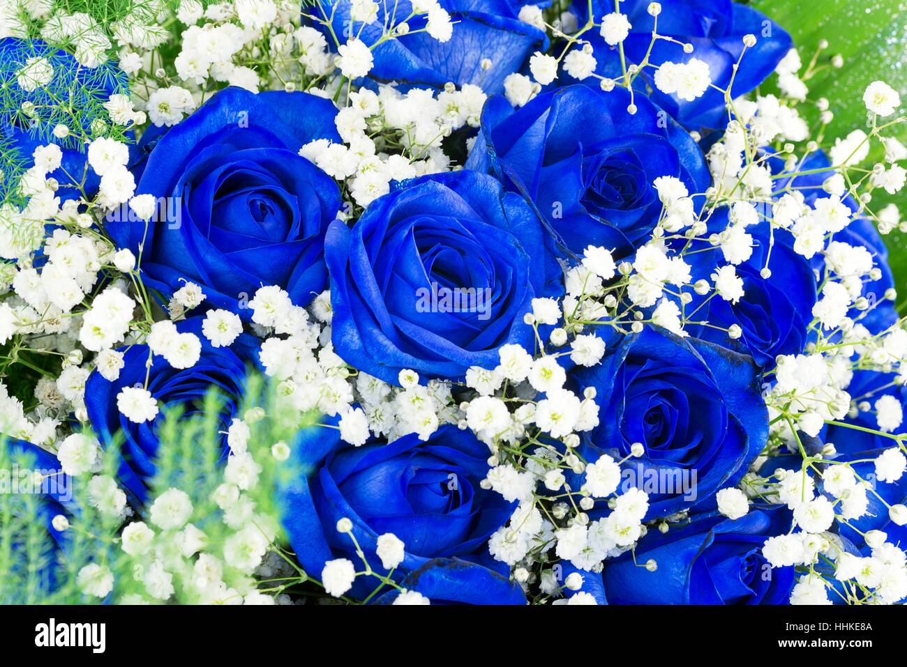 Glorious Roses Stock Photos Glorious Roses Stock Images Alamy